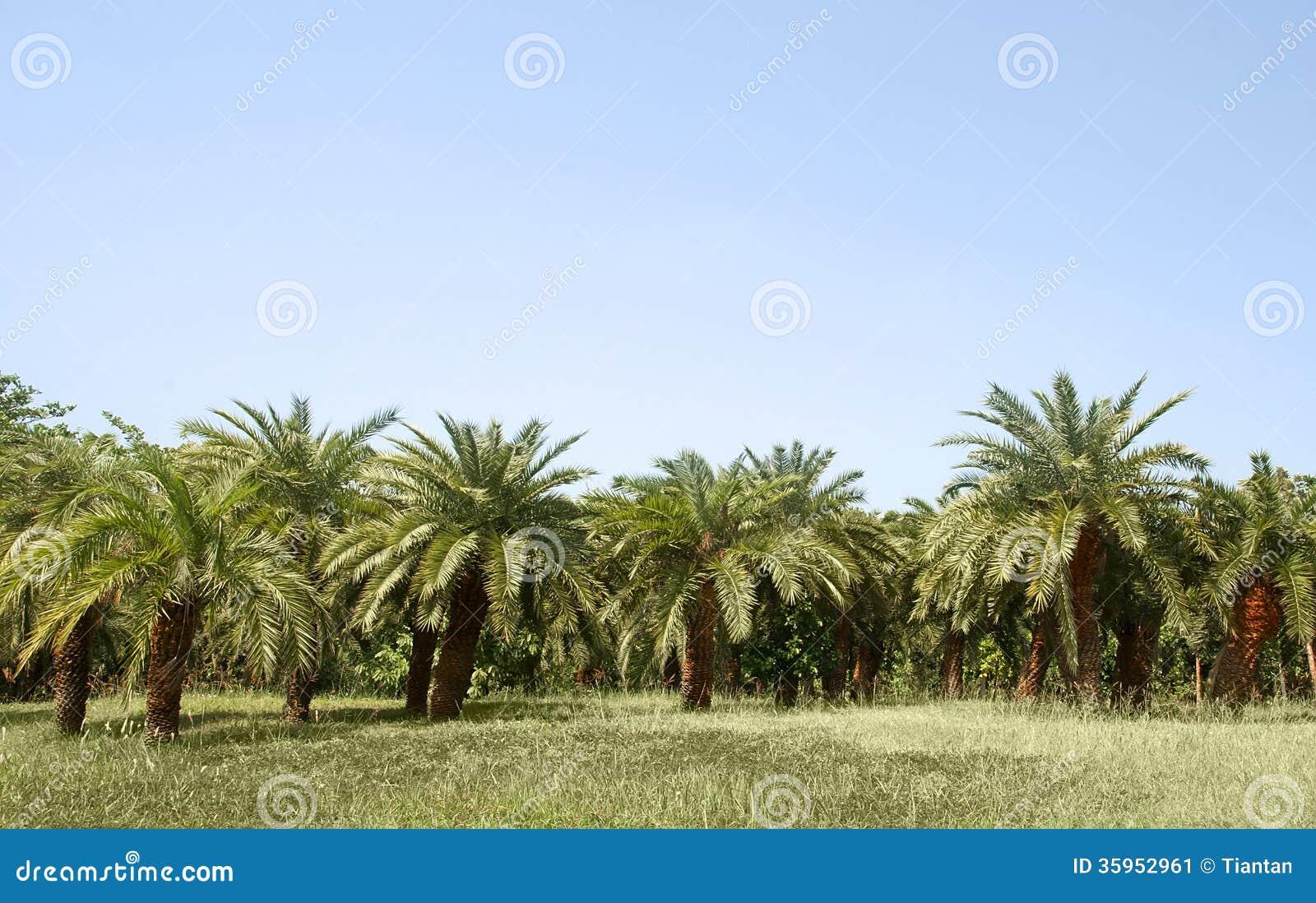 Arboleda de la palma