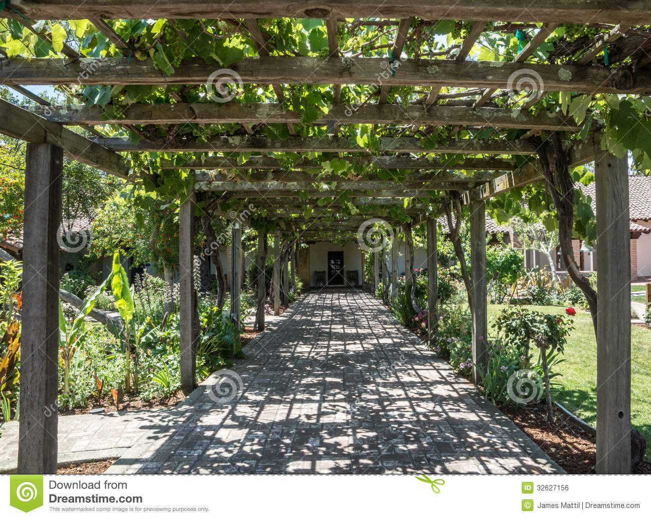 Arbor Of Grape Vines Stock Photo Image Of Obispo Building 32627156
