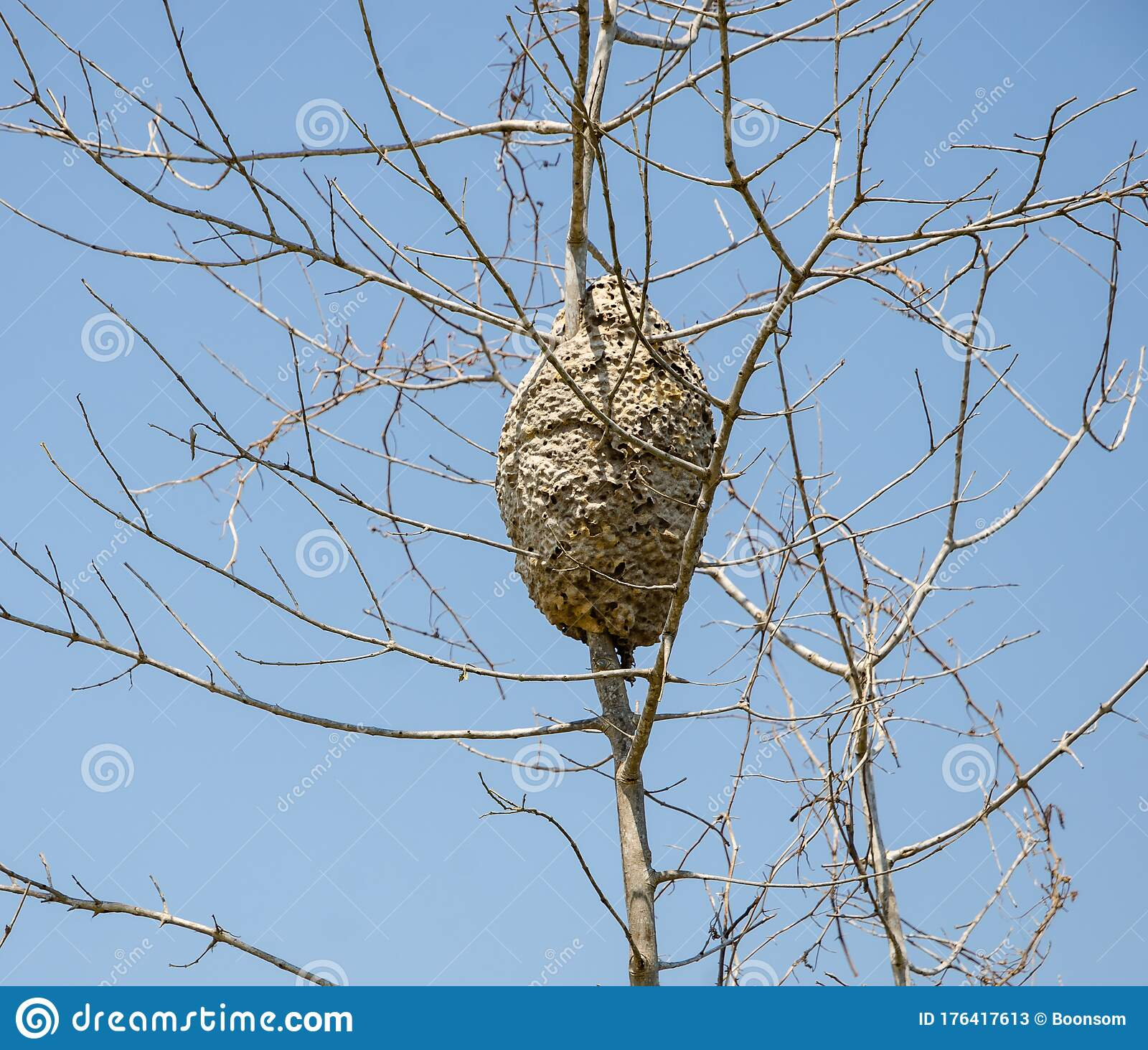 An Arboreal Termites Nest Covering Tree Trunk Stock Image Image Of Nest Closeup 176417613