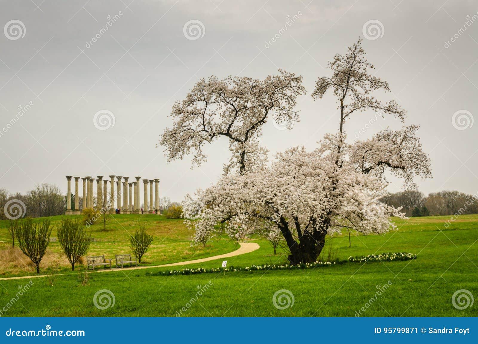 Arboreto nacional do Estados Unidos - Washington DC