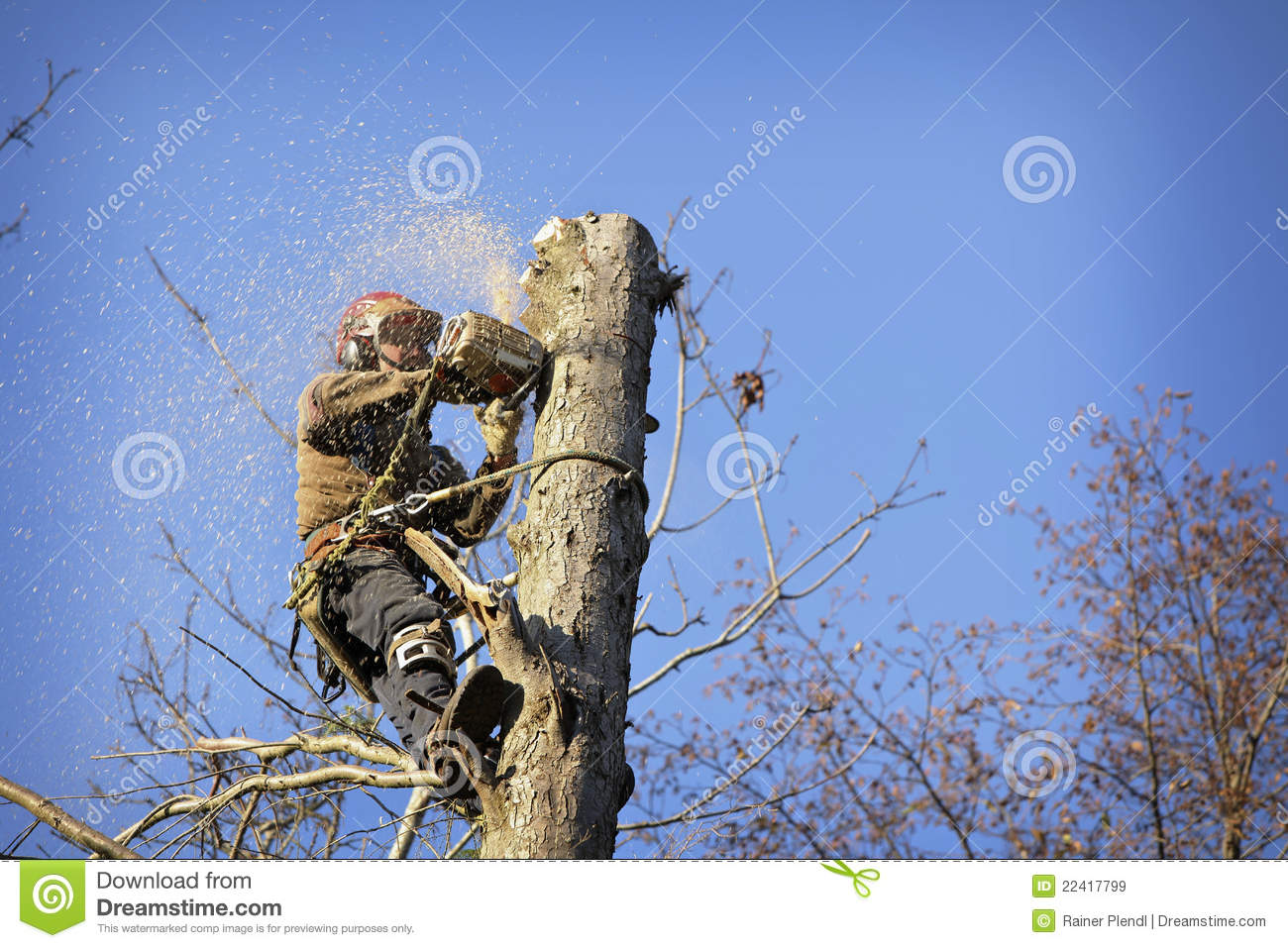 how to find an arborist