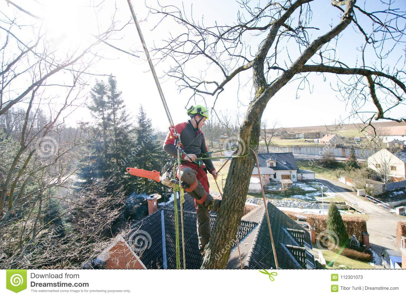 Arborist man cutting a branches with chainsaw and throw on a ground. The worker with helmet working at height on the trees. Lumber