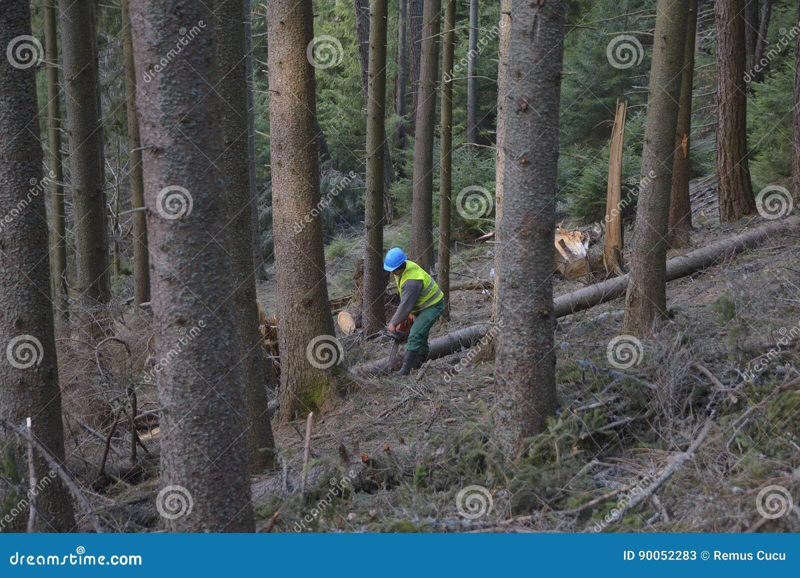Arboristträdkirurg som bär skyddande använda för helmett för hård hatt