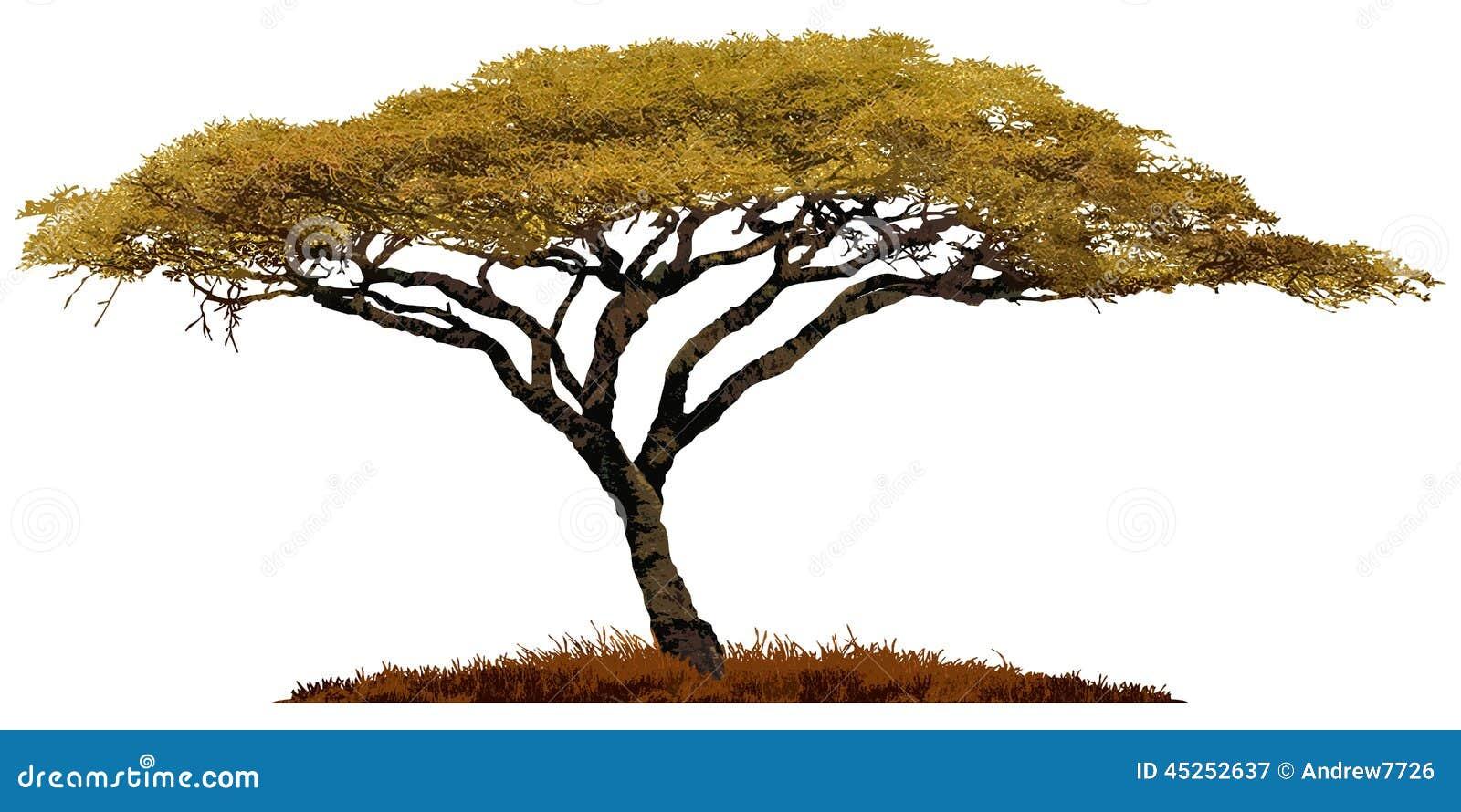 Arbre africain d 39 acacia illustration stock illustration du conception 45252637 - Arbre africain en 7 lettres ...
