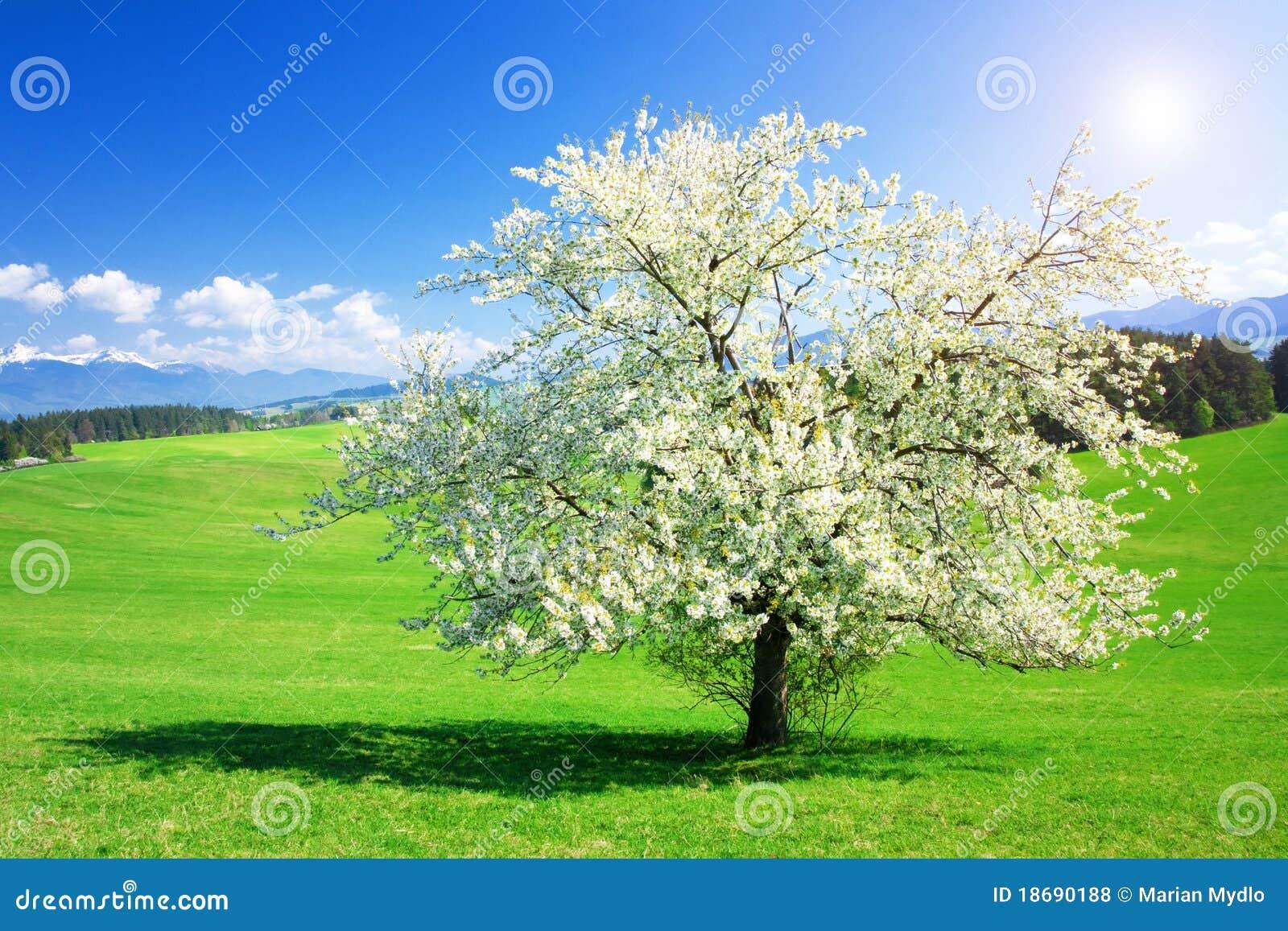 arbre au printemps photo stock image du sc ne environnement 18690188. Black Bedroom Furniture Sets. Home Design Ideas