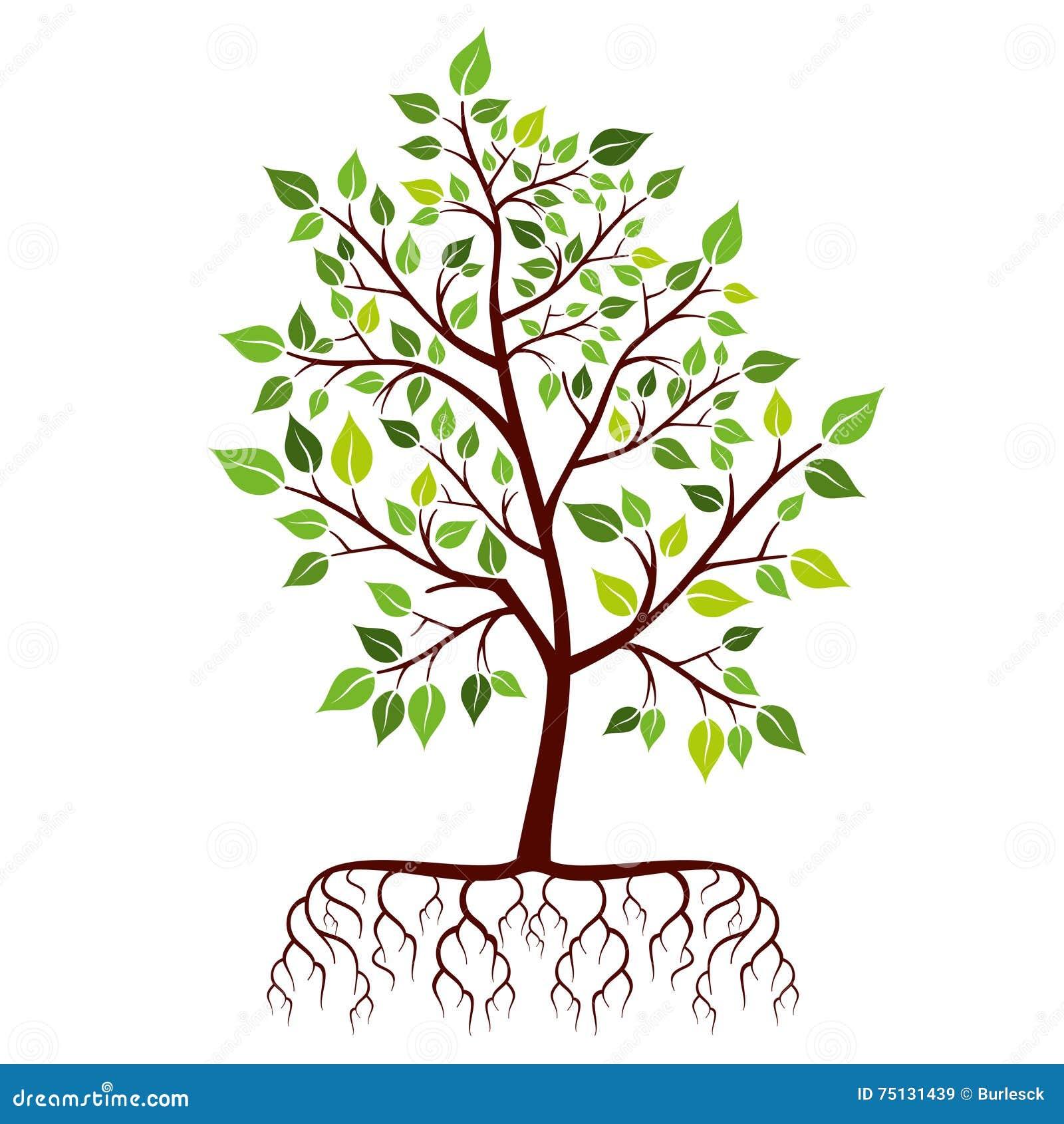 arbre avec des racines et des feuilles de vert illustration de vecteur illustration du vous. Black Bedroom Furniture Sets. Home Design Ideas