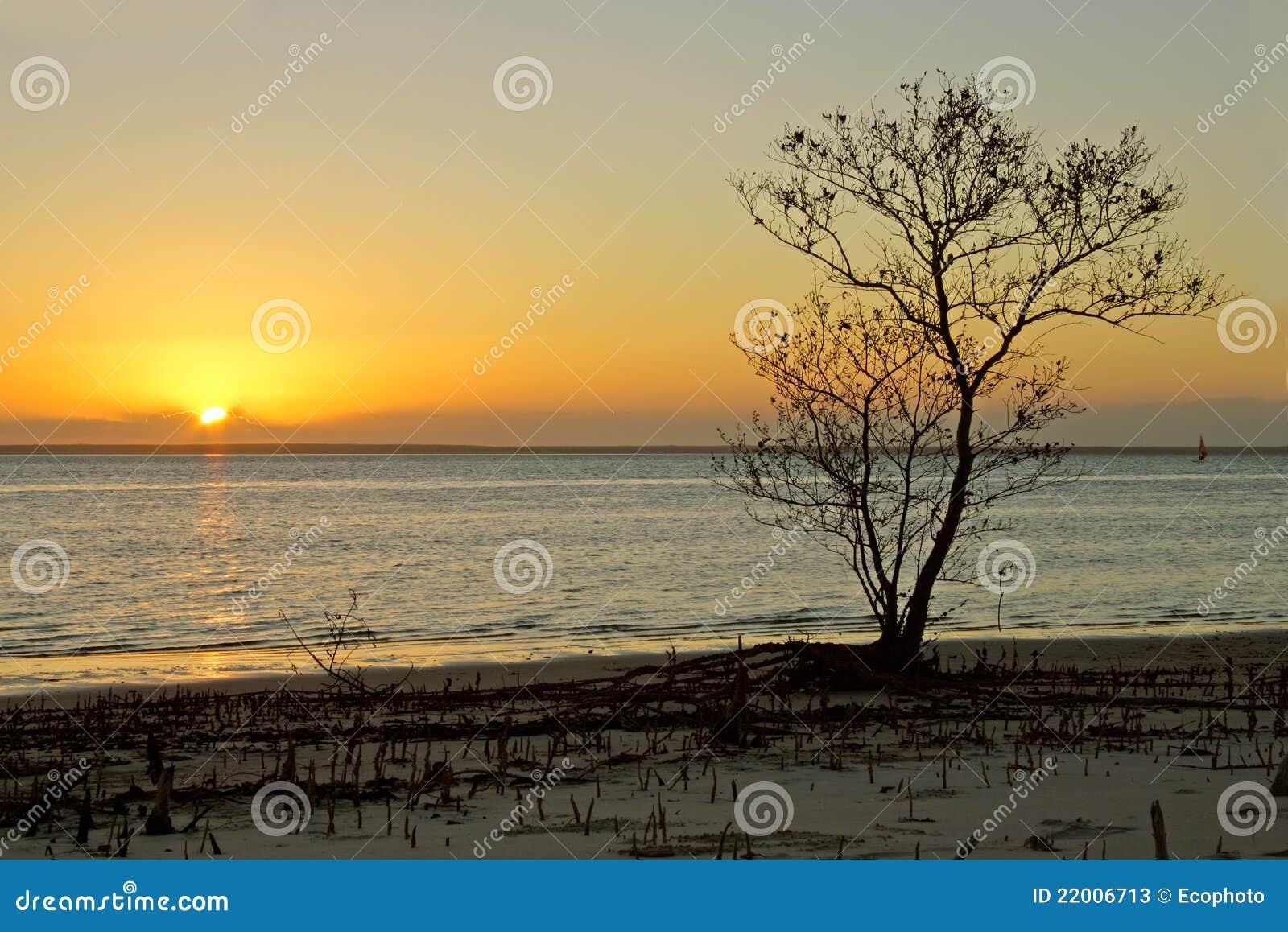 Arbre contre le coucher du soleil