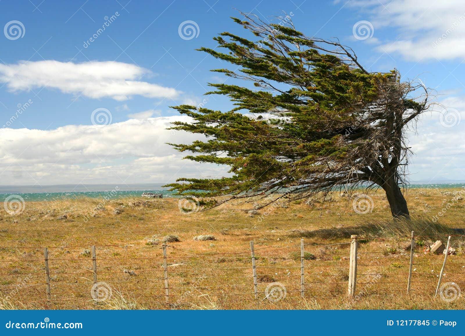 Arbre contre le vent