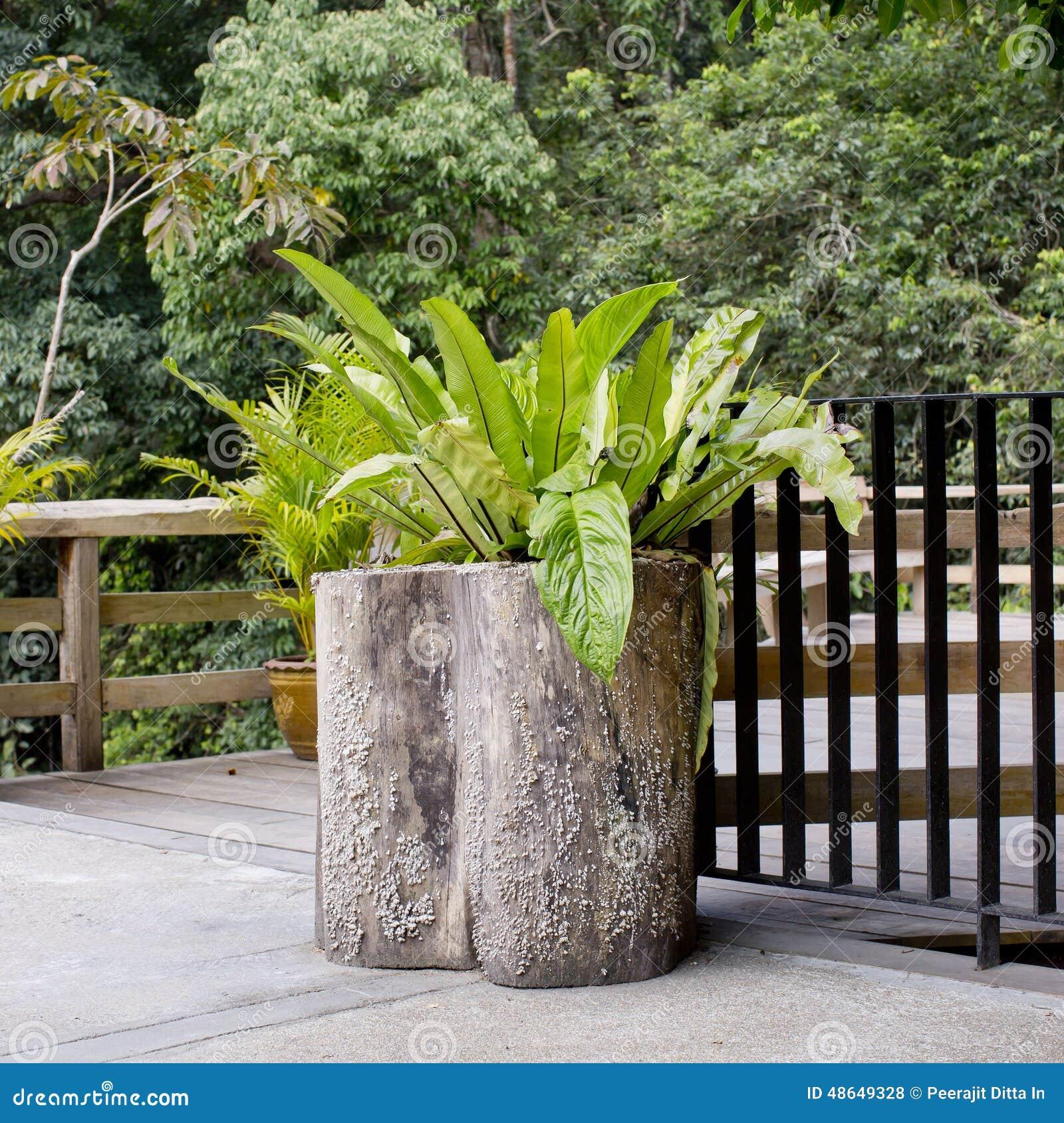 Arbre En Pot Terrasse arbre décoratif avec le pot de fleurs en bois à la terrasse