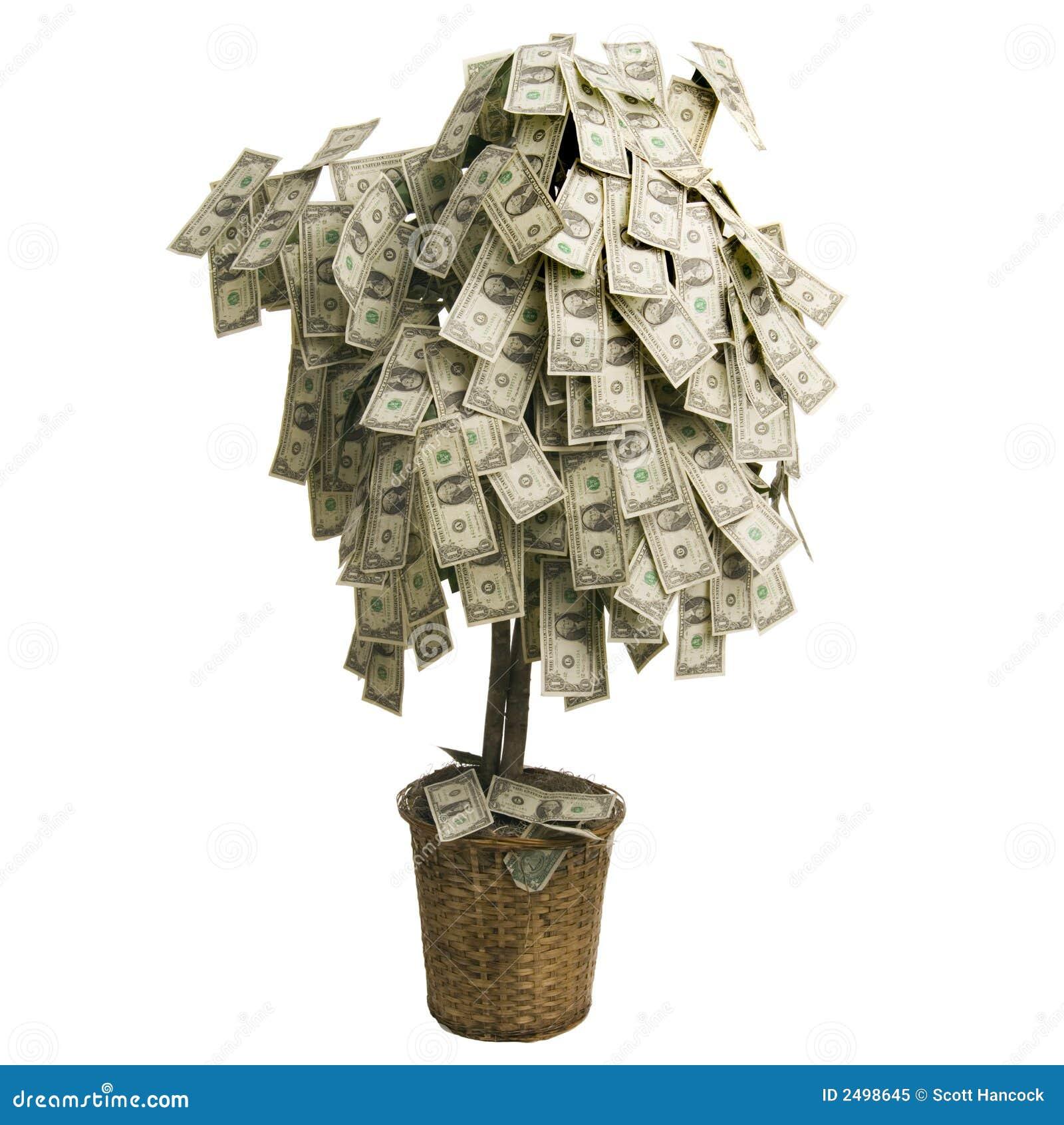 Arbre D'argent Photo libre de droits - Image: 2498645