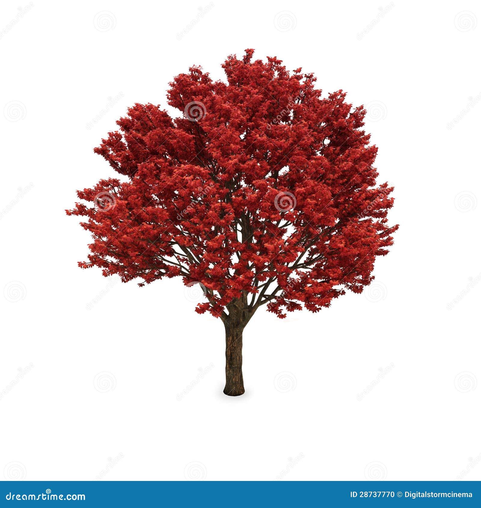 arbre d 39 automne avec le feuillage rouge photo stock image 28737770. Black Bedroom Furniture Sets. Home Design Ideas