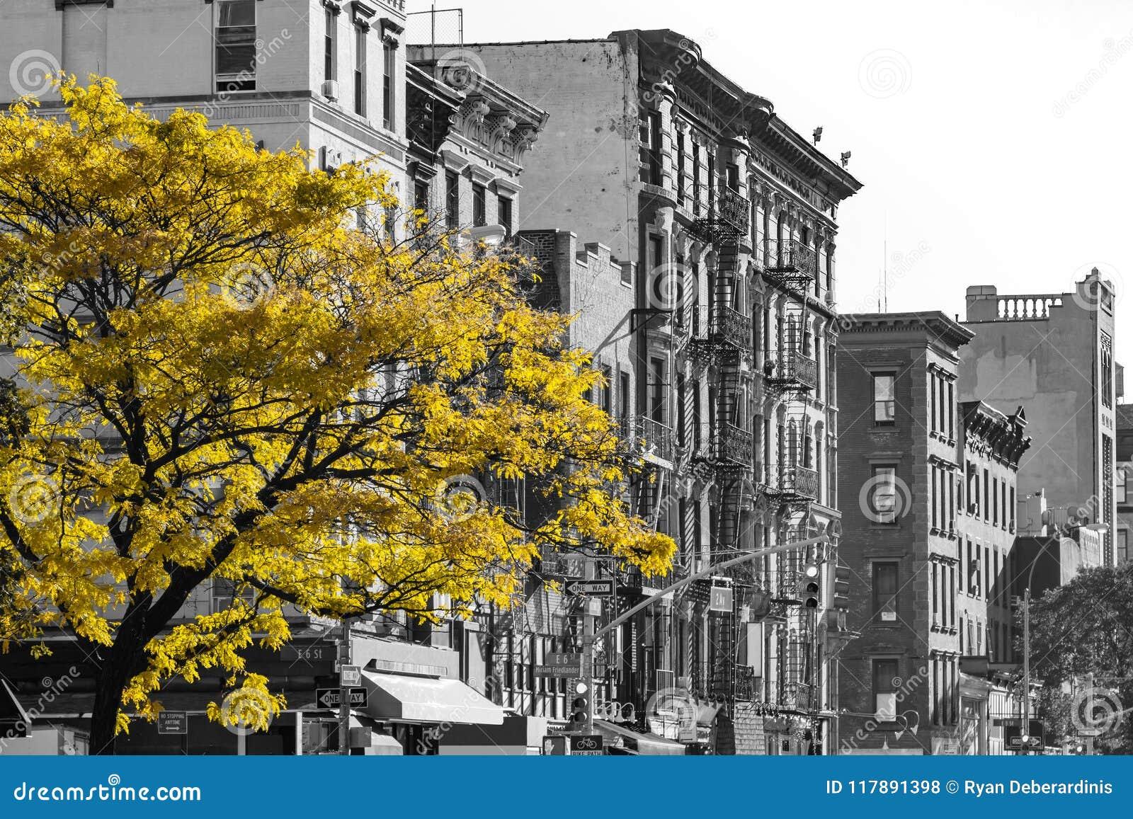 Arbre d or de chute dans la scène noire et blanche de rue de NYC