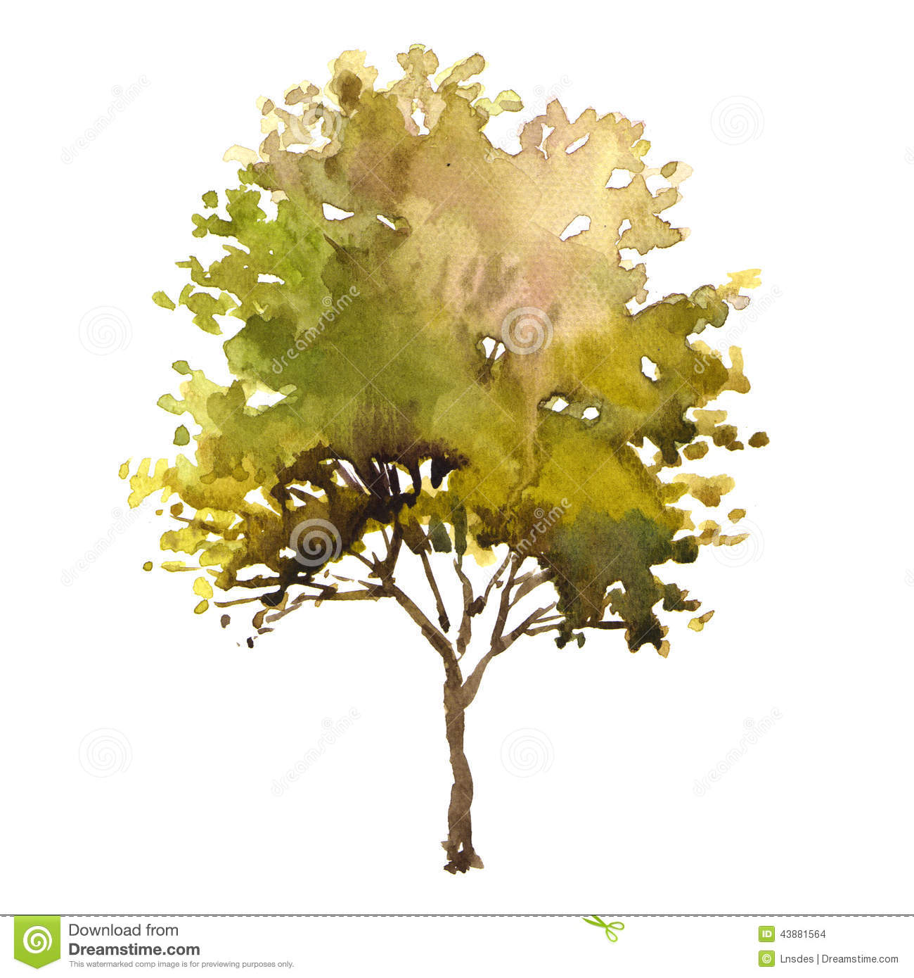 Arbre Dillustration Daquarelle Illustration Stock Image 43881564