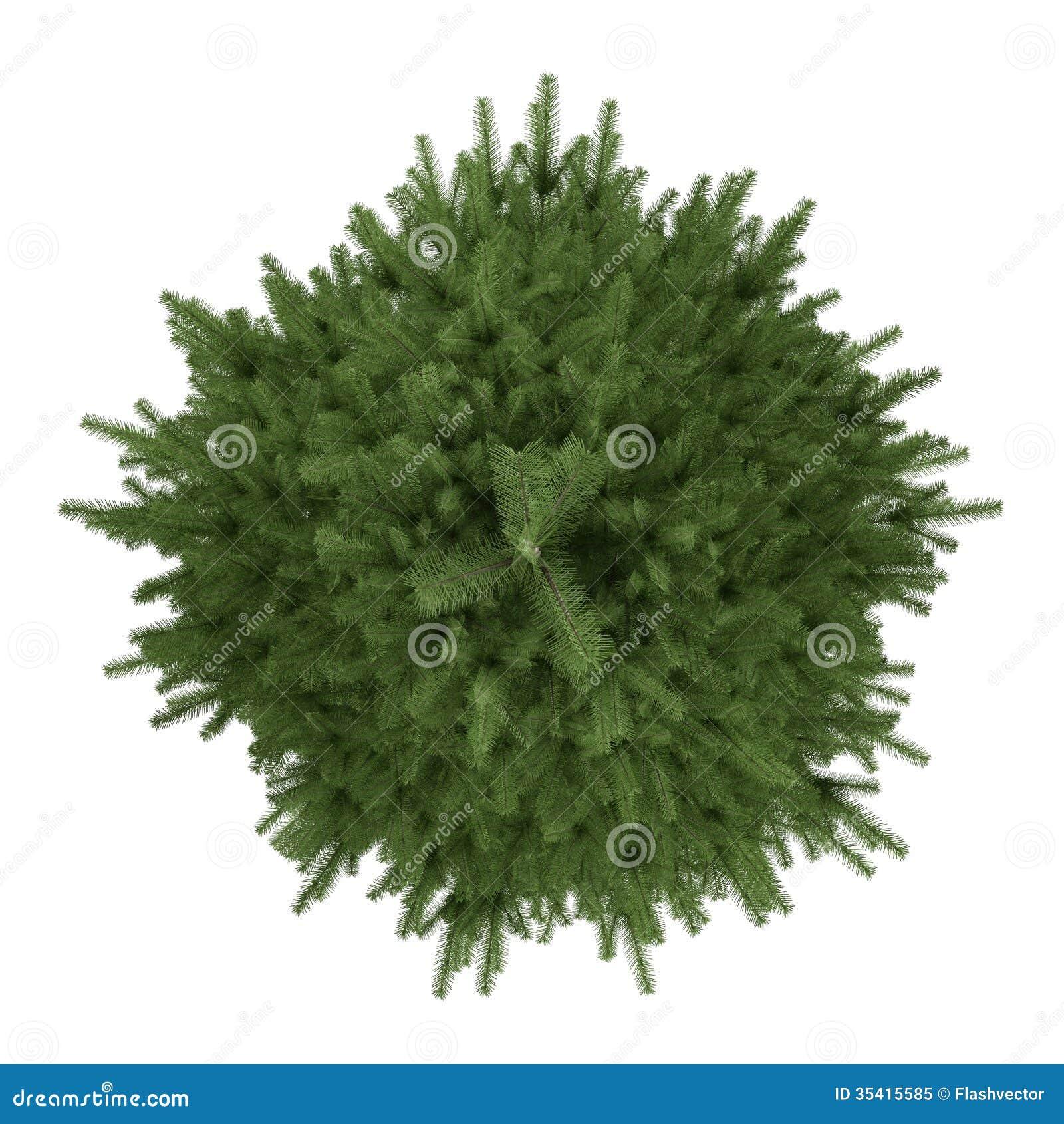 Дерево туя  посадка и уход фото туи пересадка и
