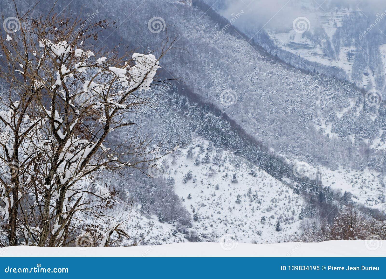 Arbre dans des gorges de Goulets de Grands, Alpes français