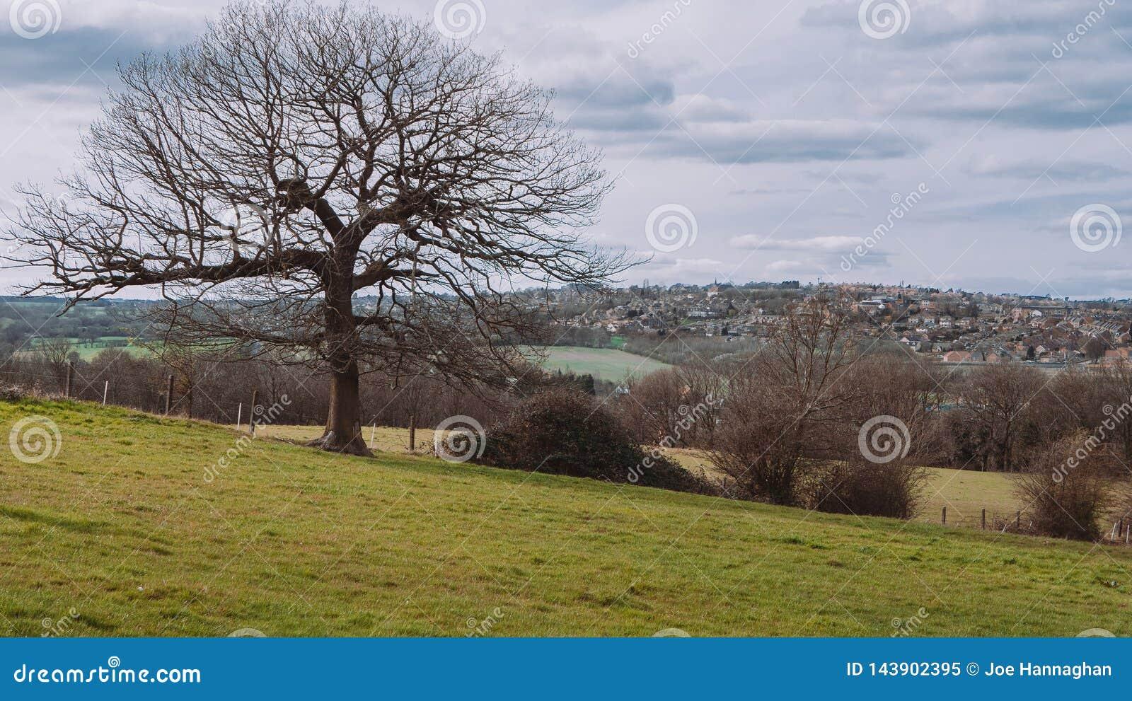 Arbre dans le paysage de campagne de Yorkshire