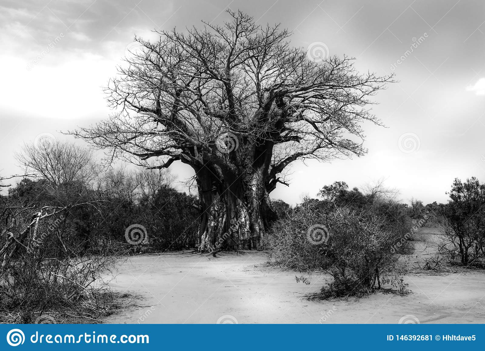 Arbre de baobab dans le paysage africain