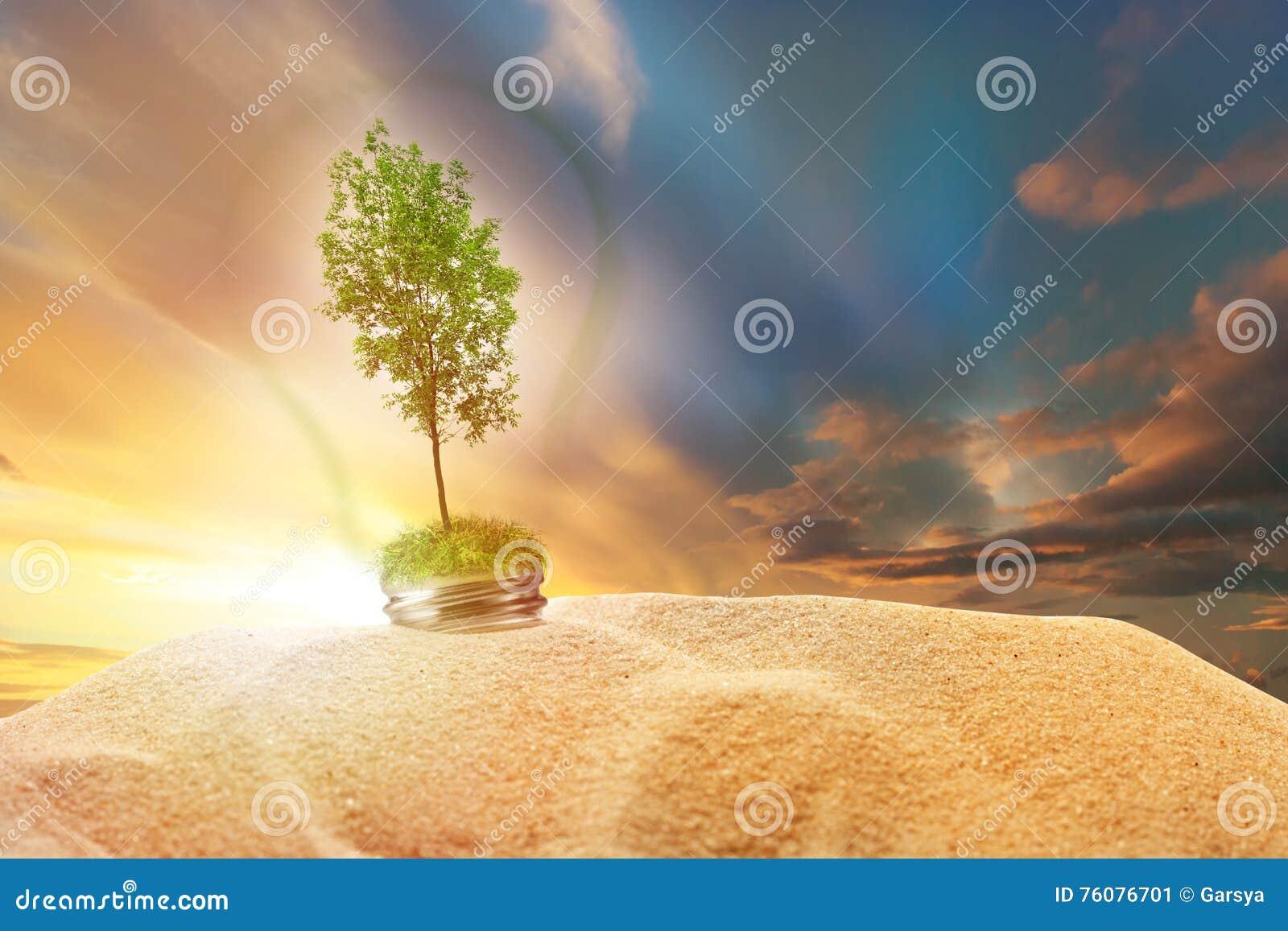 Arbre de cendre verte à l intérieur de lampe en sable sur le ciel de coucher du soleil