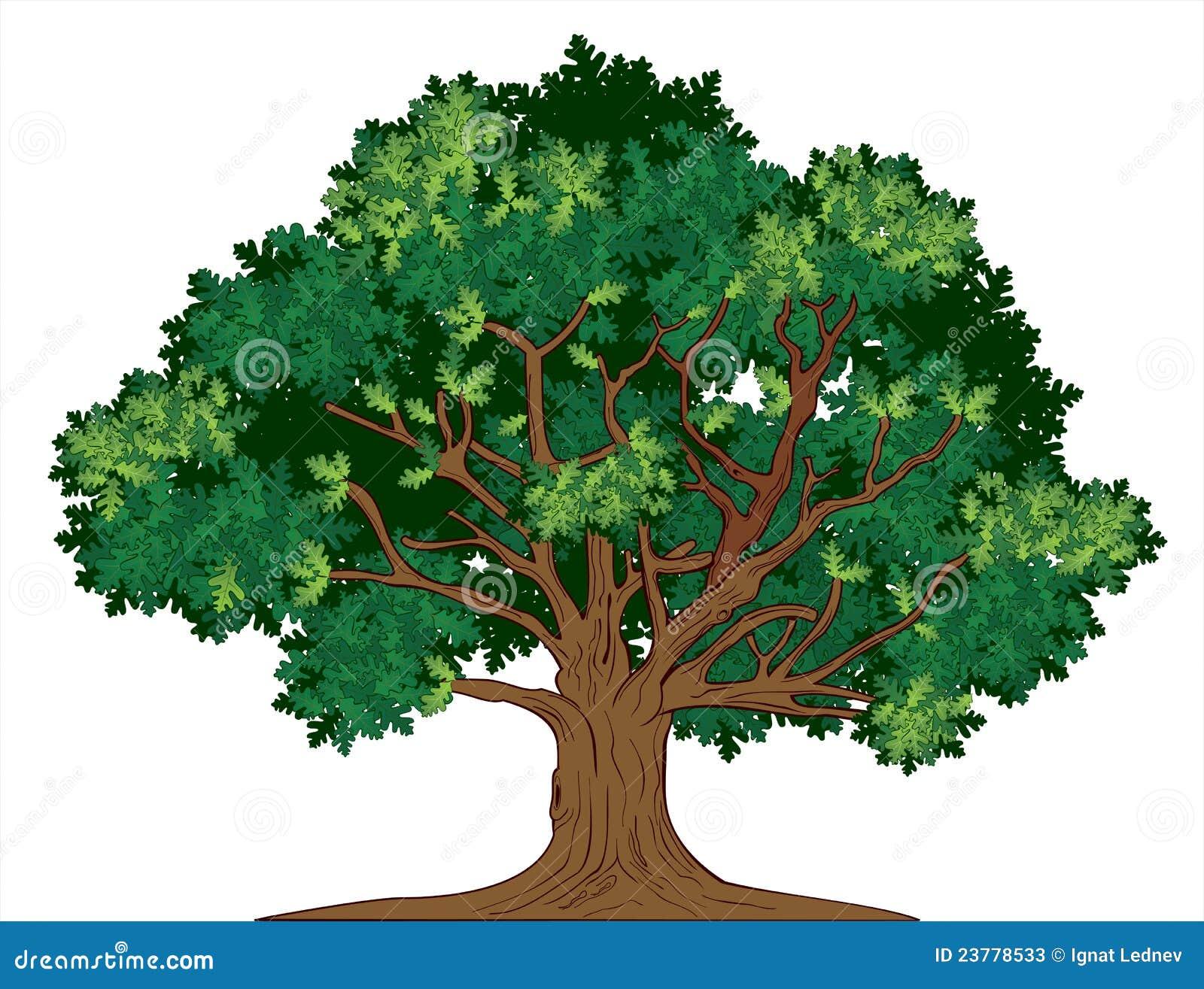 Arbre de chêne de vecteur