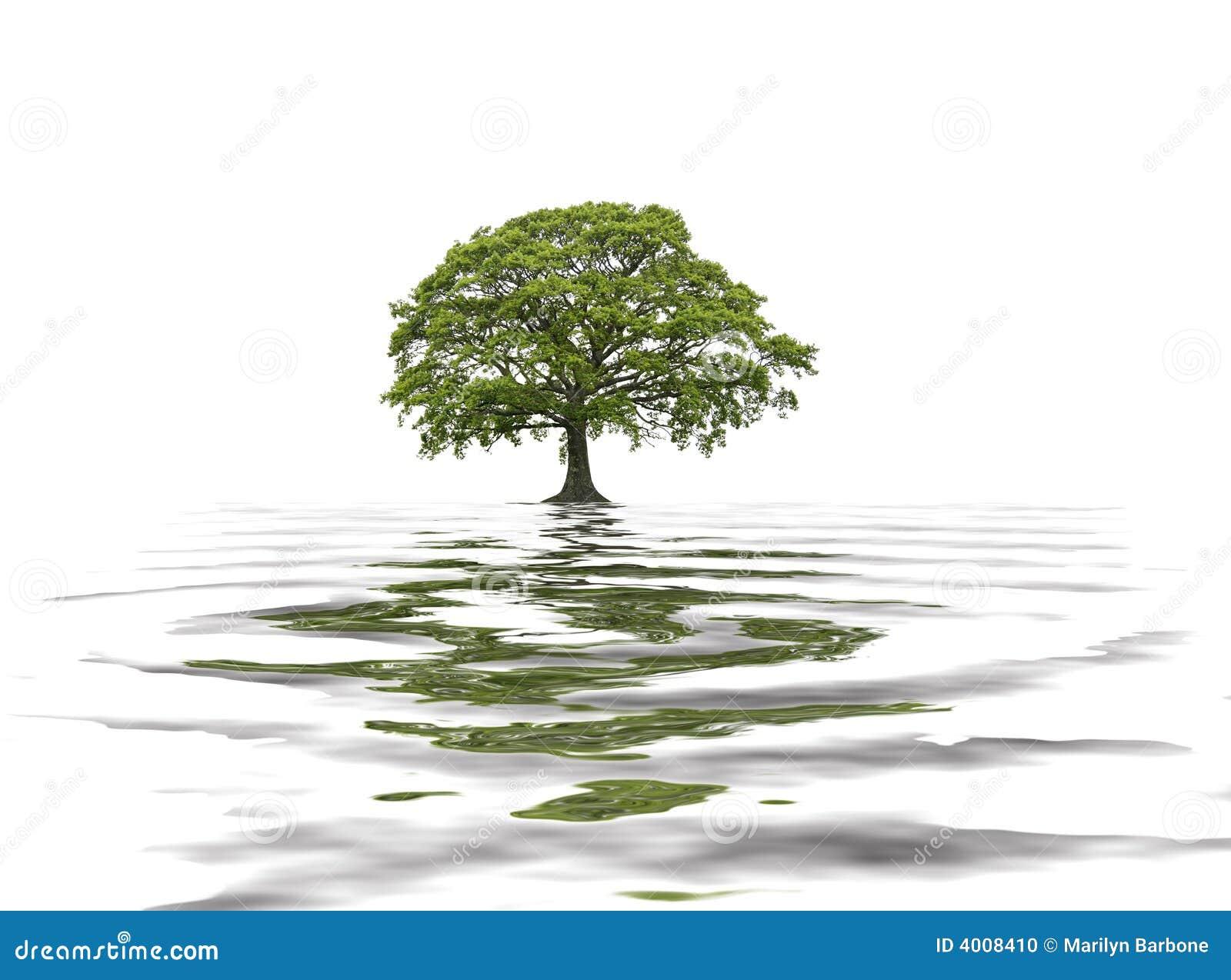 Arbre de chêne en été