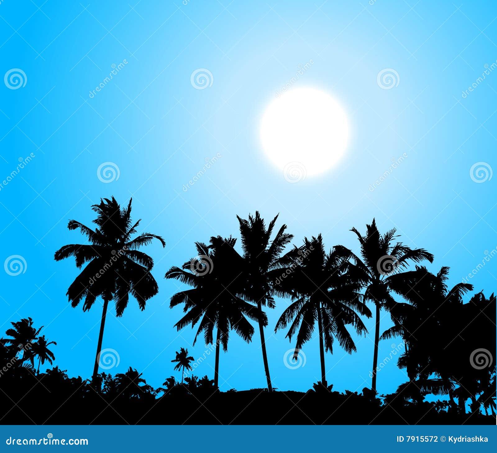 Arbre de coucher du soleil de silhouette de paume tropical