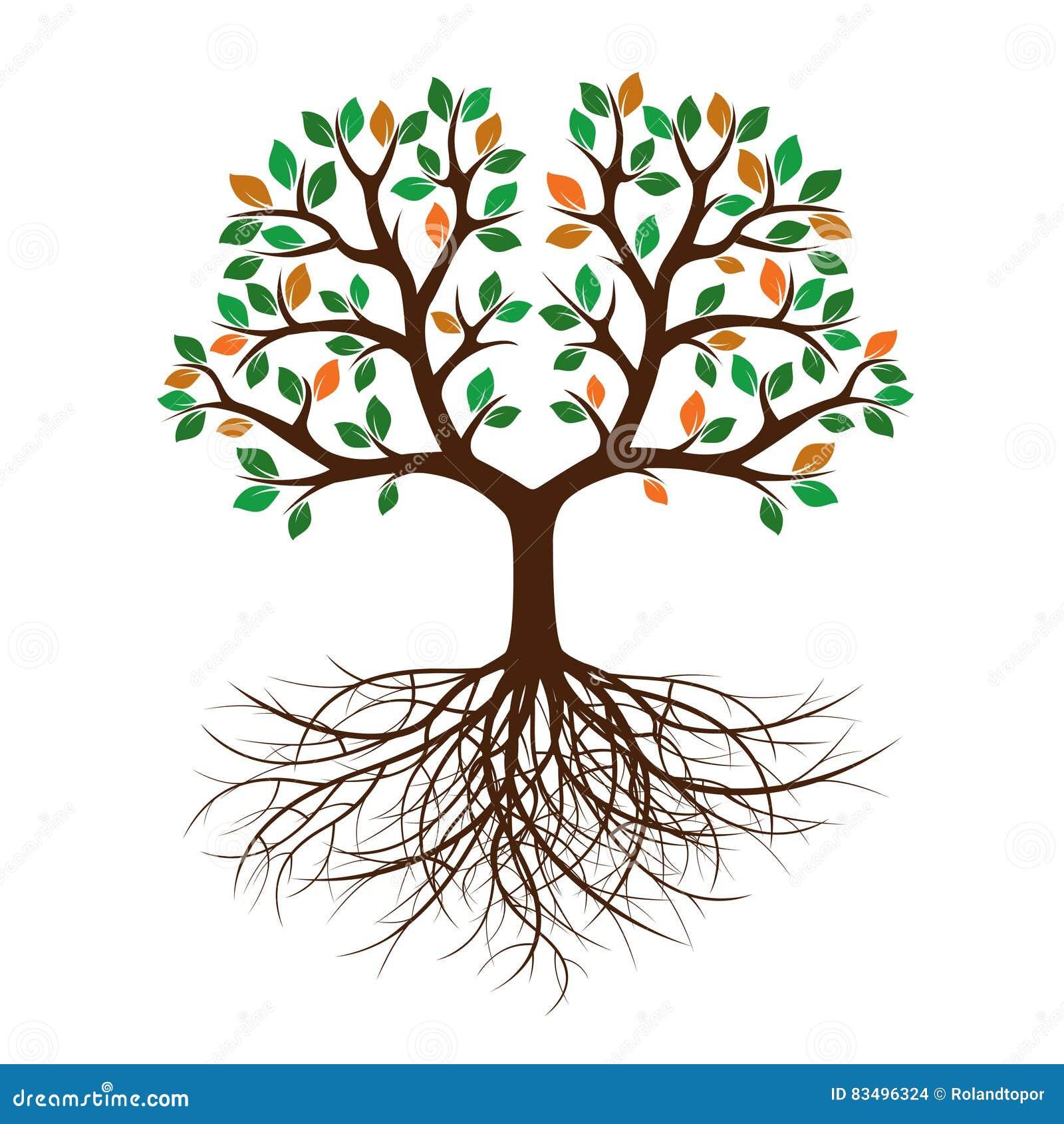 arbre de couleur avec des feuilles et des racines illustration de vecteur illustration de. Black Bedroom Furniture Sets. Home Design Ideas
