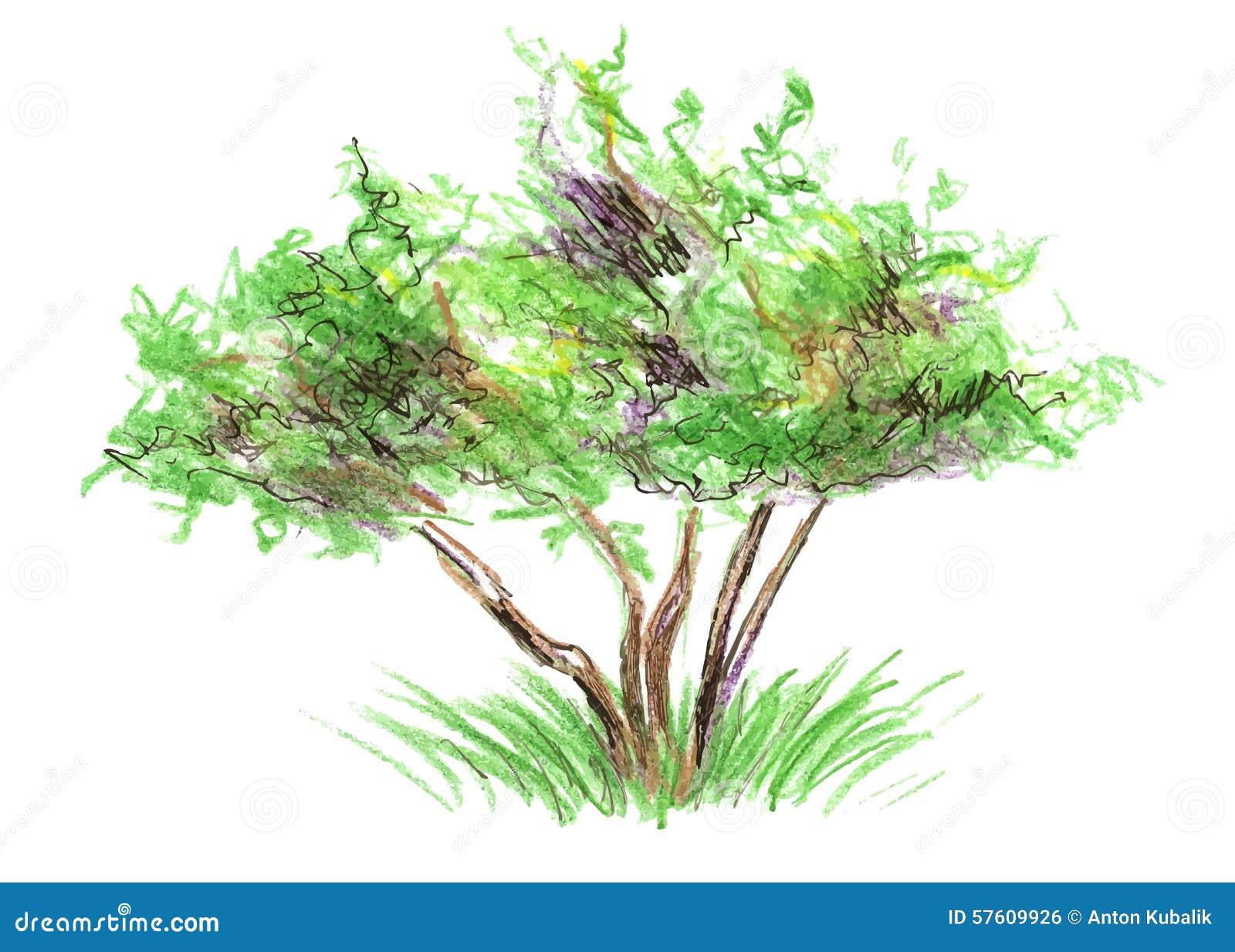 Arbre de croquis de couleur illustration de vecteur - Croquis arbre ...