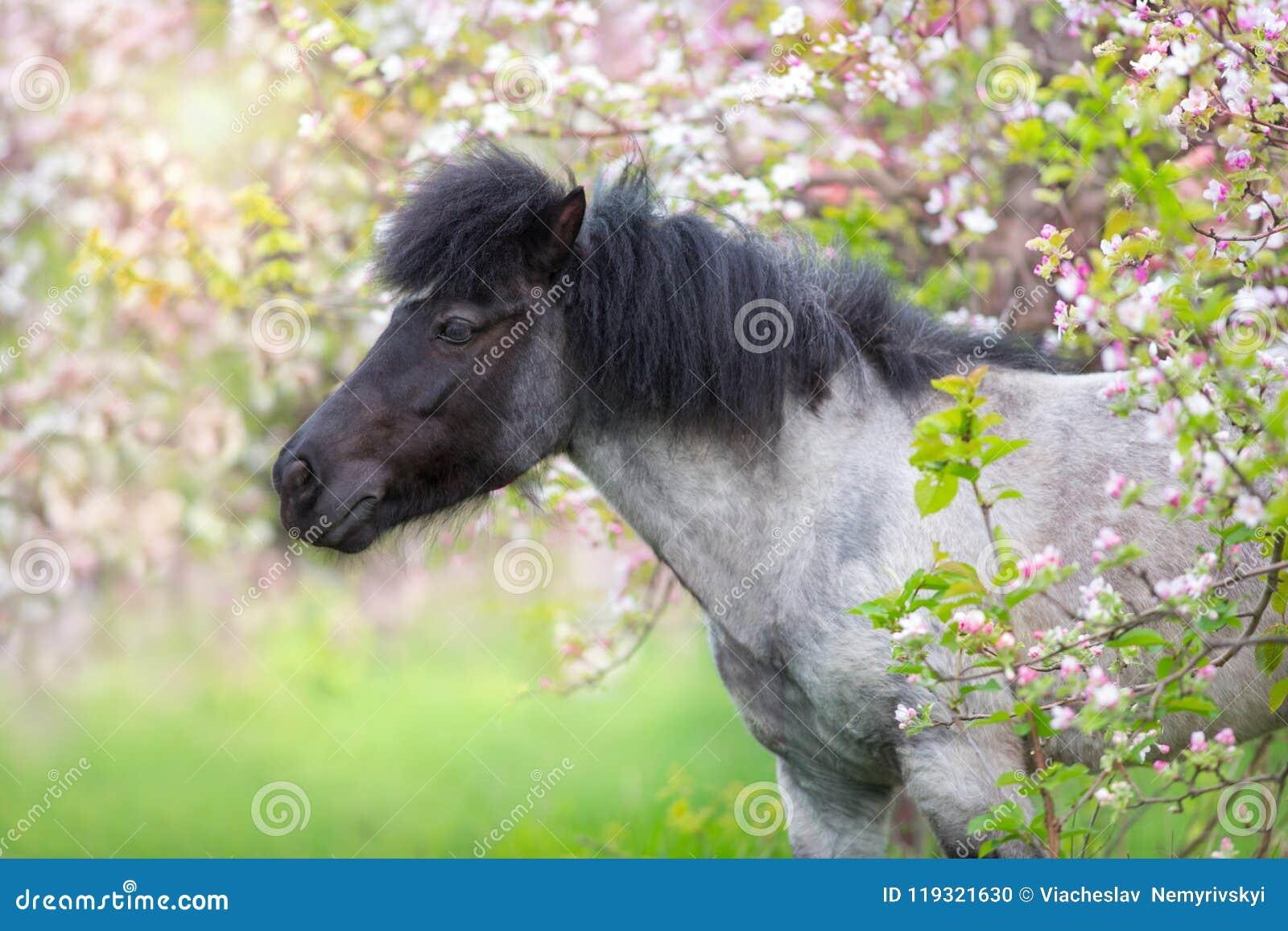 Arbre de fleur de poney au printemps