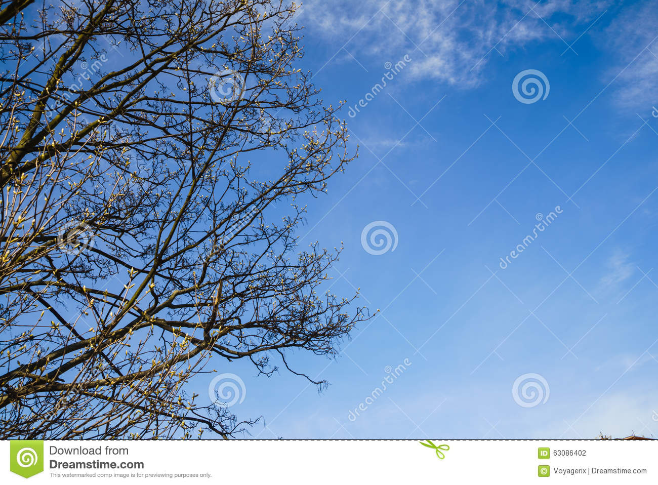 Download Arbre De Floraison Sur Le Fond De Ciel Bleu Photo stock - Image du nature, branchements: 63086402