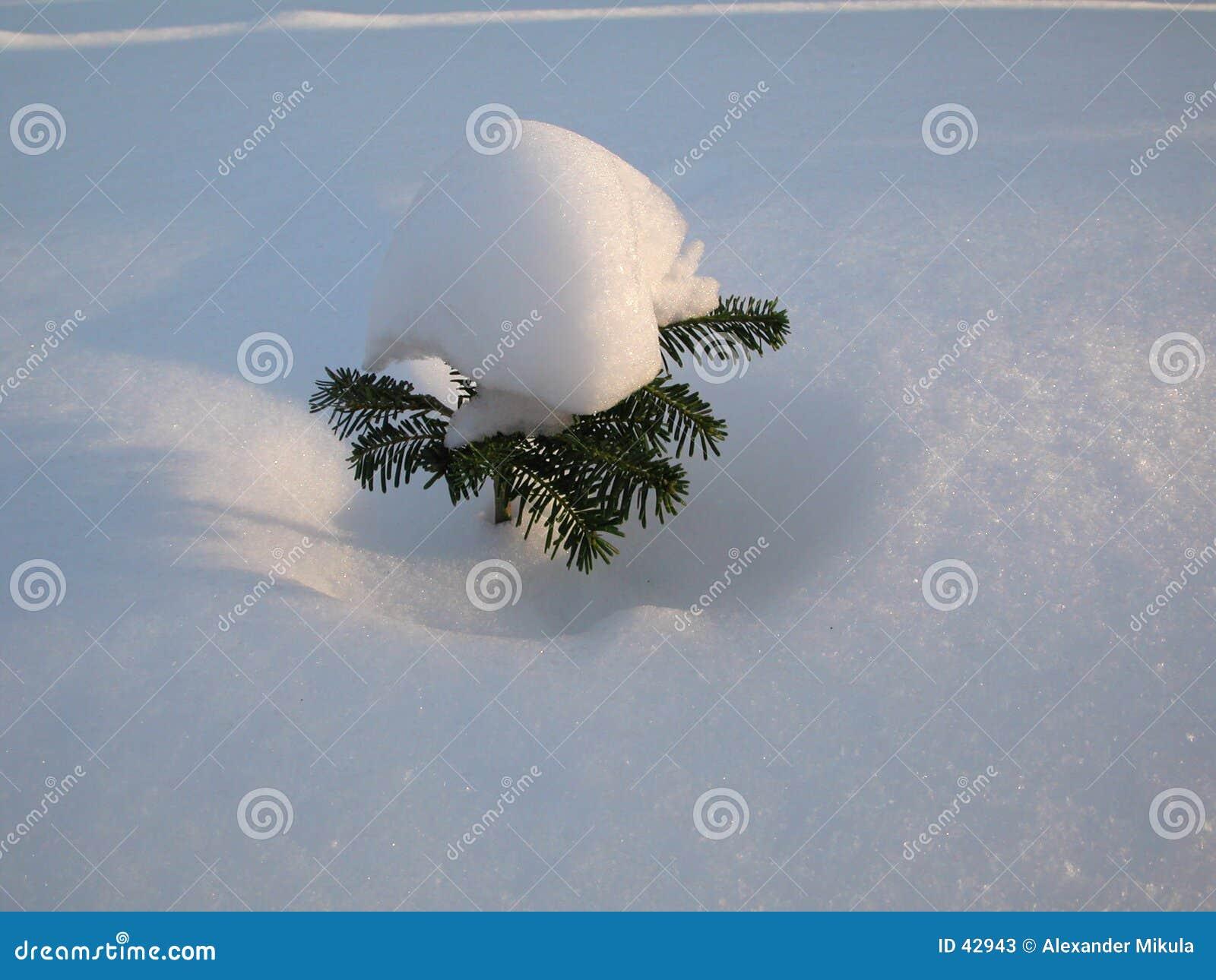 Arbre de neige