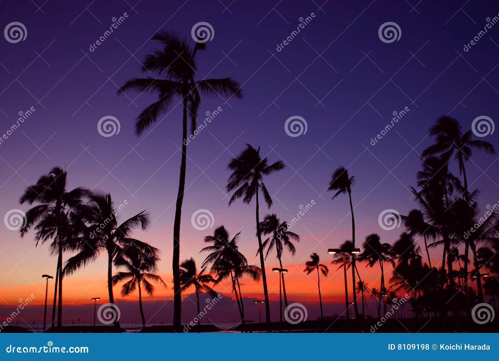 Arbre de noix de coco photos libres de droits image 8109198 - Arbre noix de coco ...