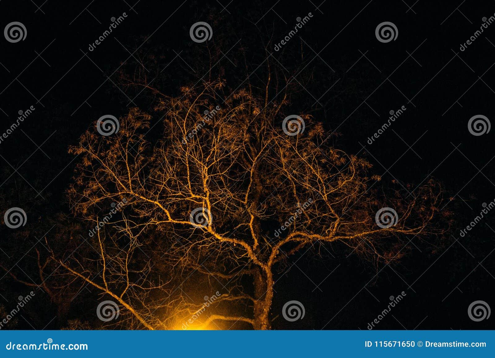 Arbre de nuit à la lumière de lampe