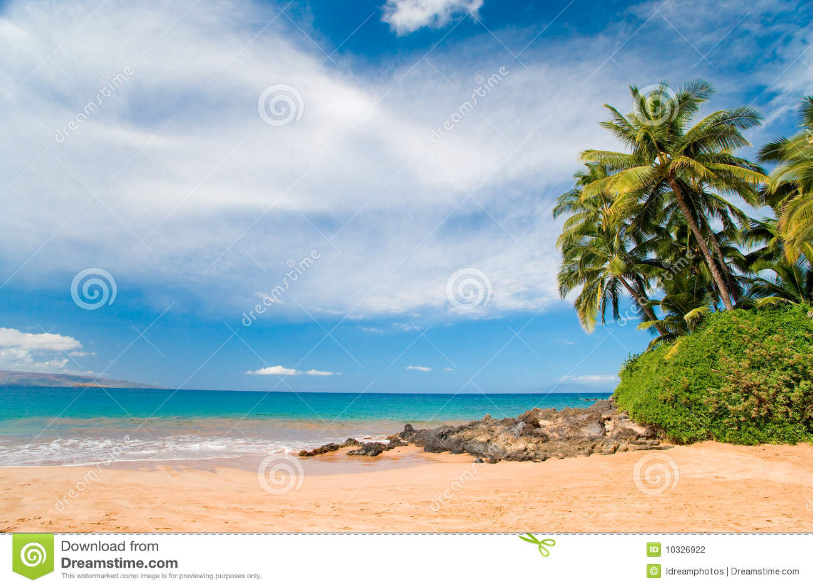 Arbre de plam d Hawaï de plage