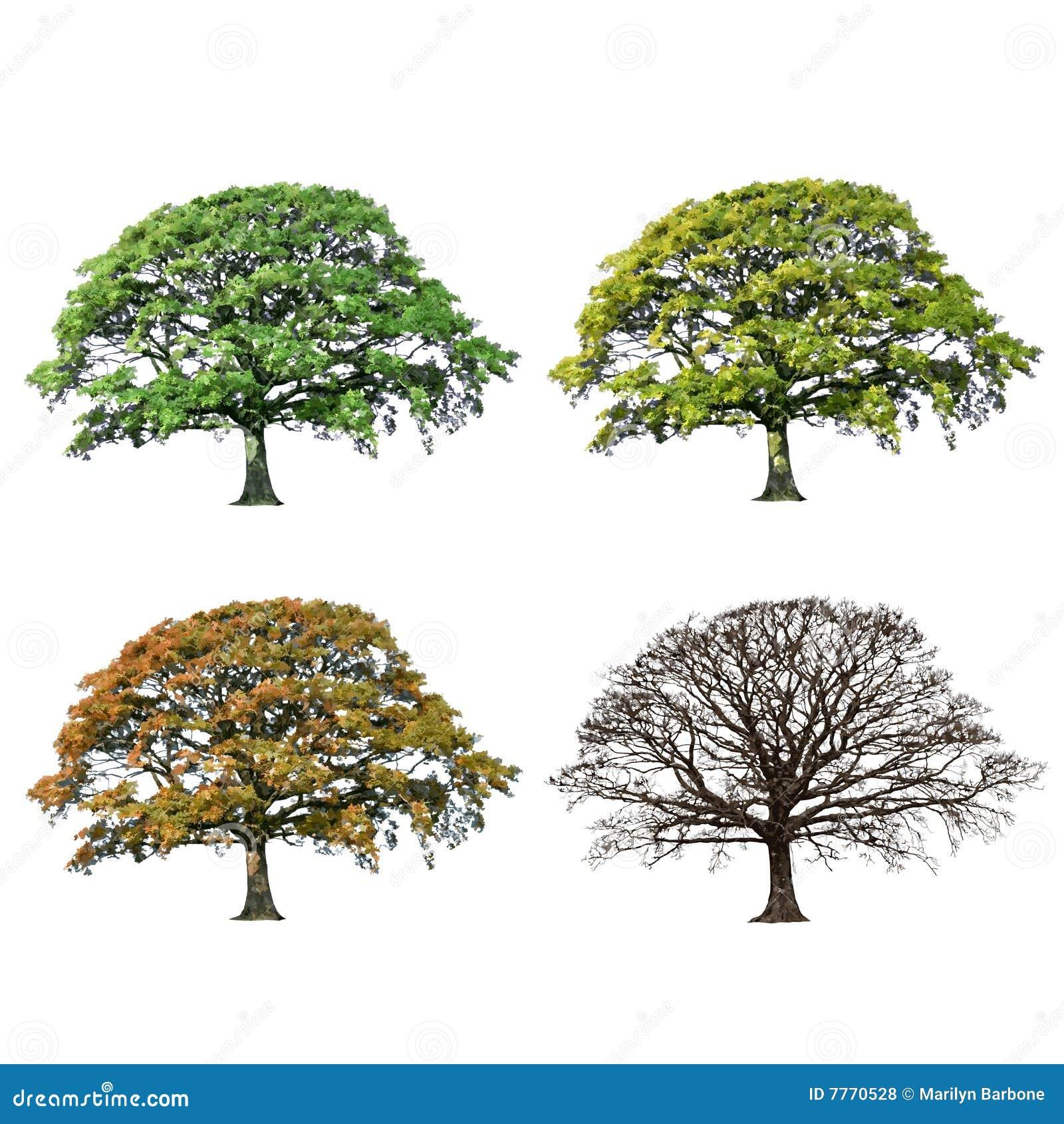 Arbre de saisons de ch ne de l 39 abstrait quatre photos for De l arbre au meuble