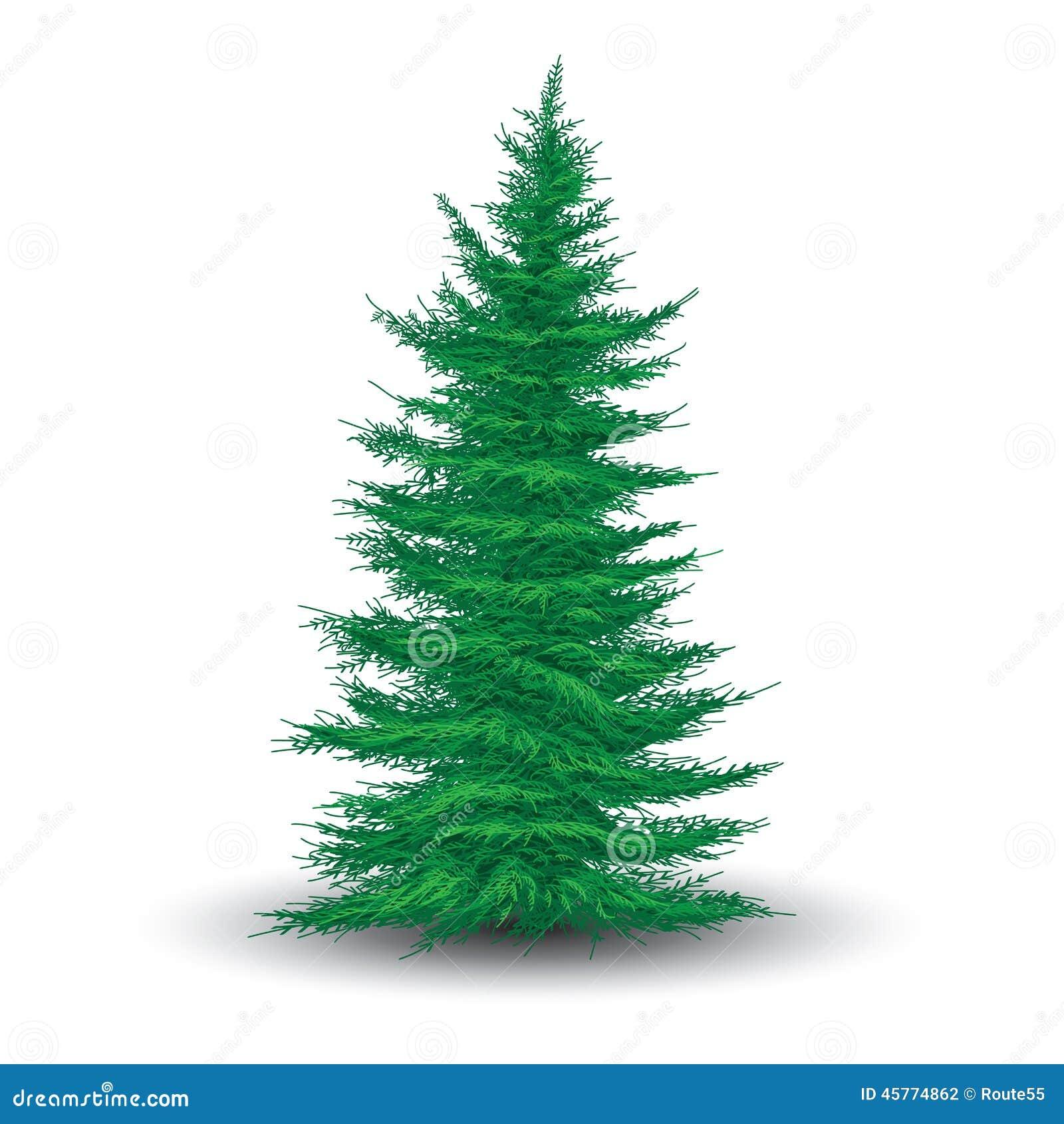 arbre de sapin vert illustration de vecteur image 45774862. Black Bedroom Furniture Sets. Home Design Ideas