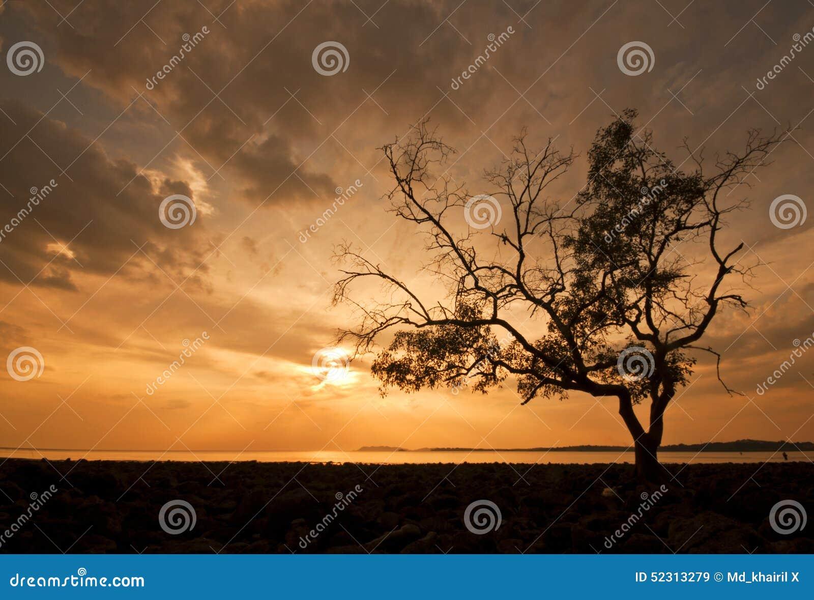 Arbre de silhouette pendant le moment de coucher du soleil