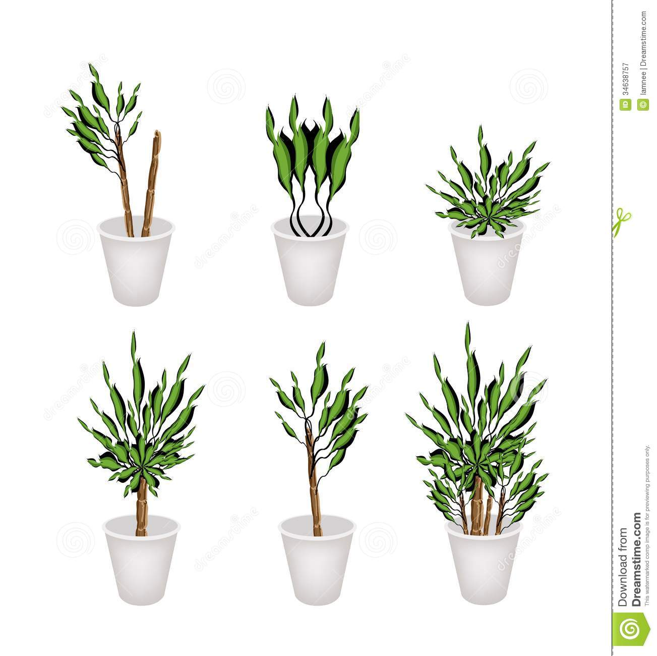 arbre de yucca ou usine de dracaena dans un pot de fleur illustration de vecteur illustration. Black Bedroom Furniture Sets. Home Design Ideas