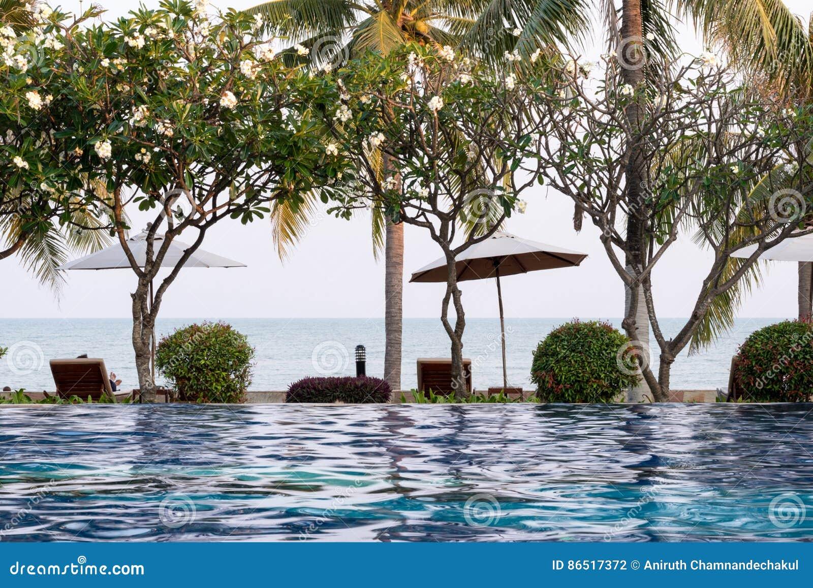 arbre et chaise de noix de coco autour de piscine extérieure dans la