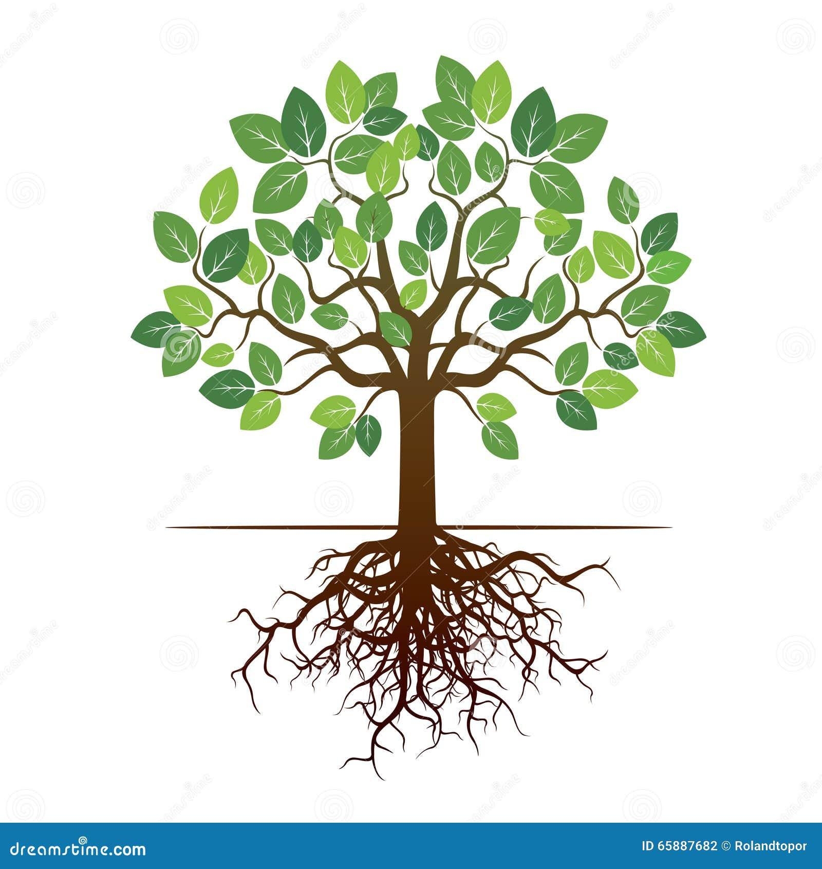 arbre et racines de couleur illustration de vecteur illustration stock illustration du dessin. Black Bedroom Furniture Sets. Home Design Ideas