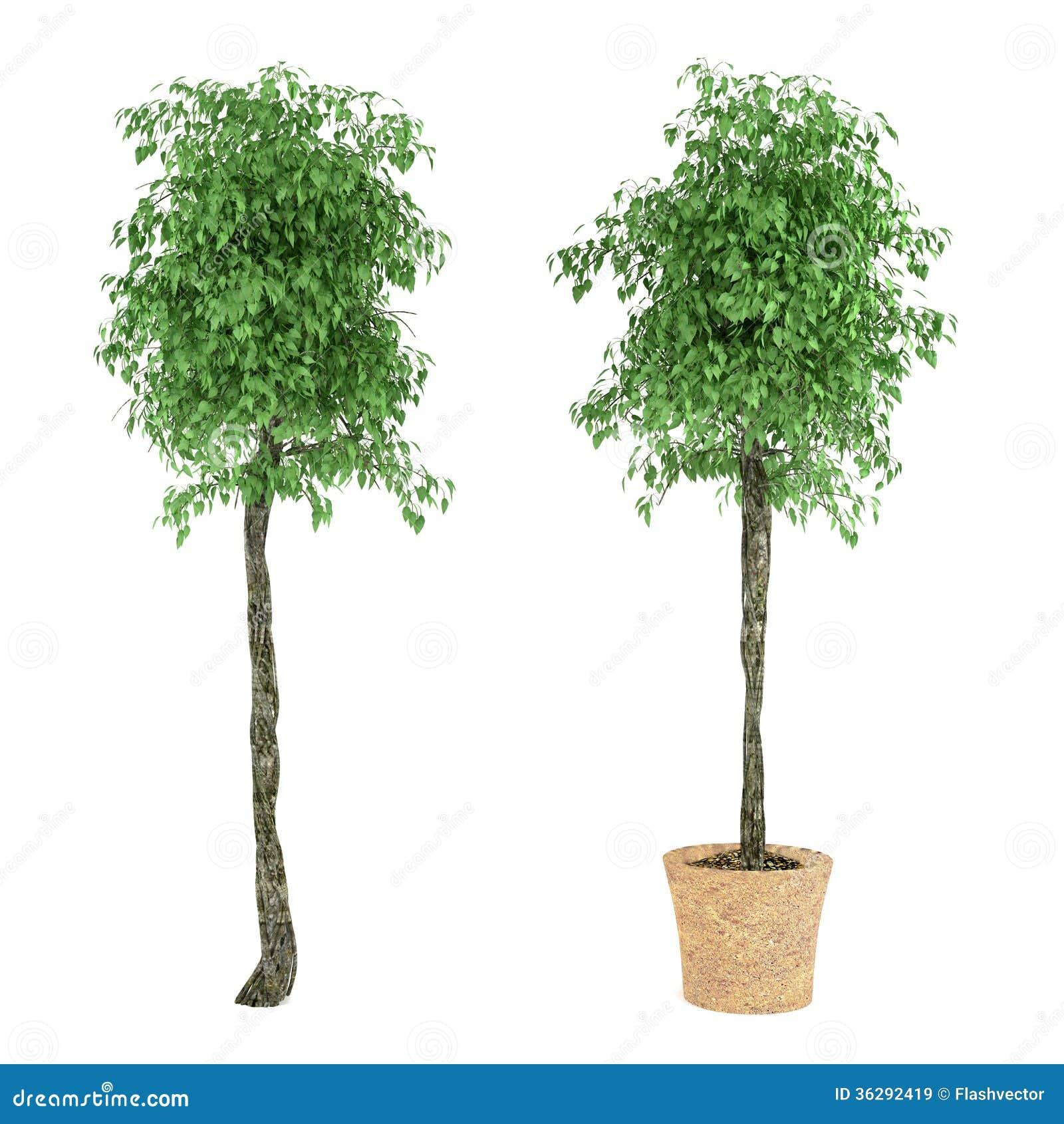 arbre exotique d 39 usine dans le pot illustration stock image 36292419. Black Bedroom Furniture Sets. Home Design Ideas