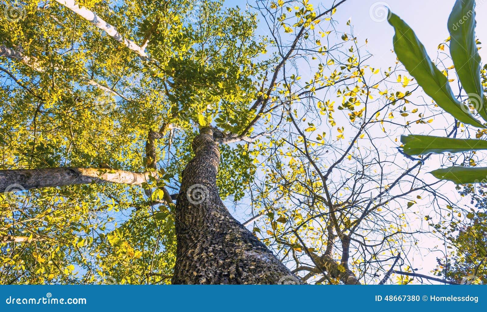 Arbre fond tropical de feuillage vert la jungle de for t for Plante jungle