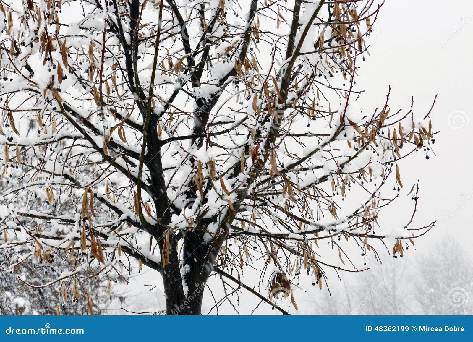 Arbre froid d hiver avec l horaire d hiver de neige