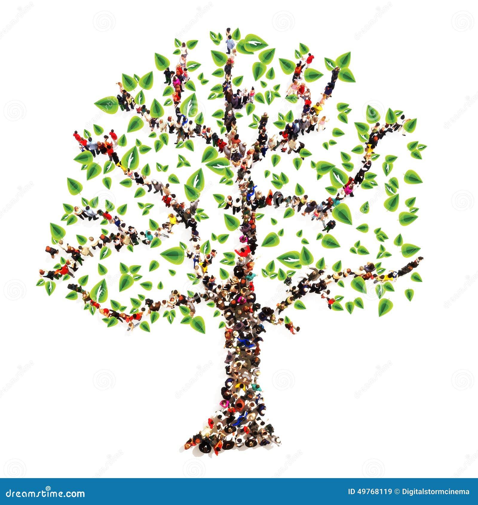 Arbre g n alogique illustration stock image 49768119 - Idee arbre genealogique original ...