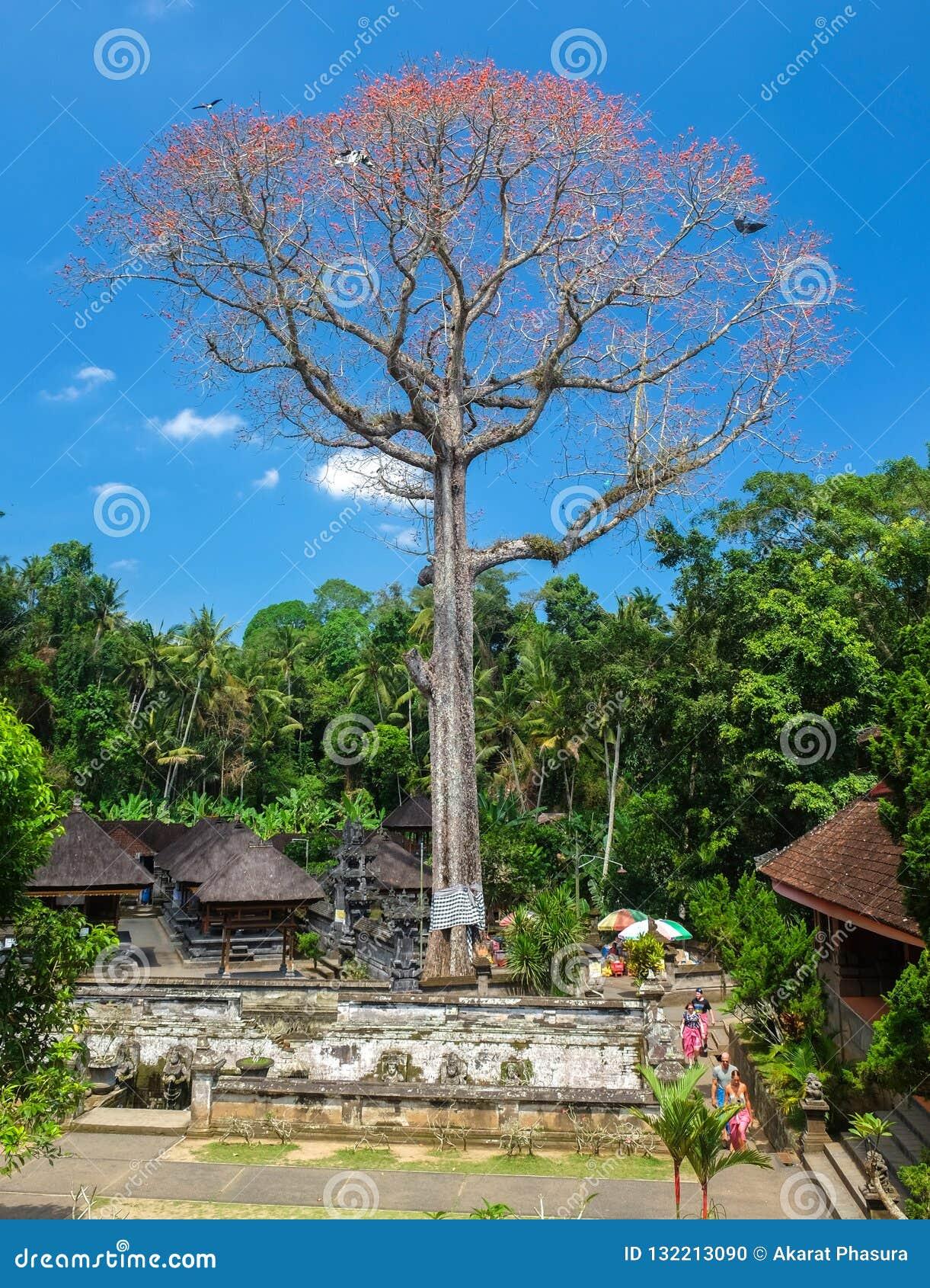 Arbre grand même avec la fleur et les toits roses de Balinese au temple Bali de Goa Gajah