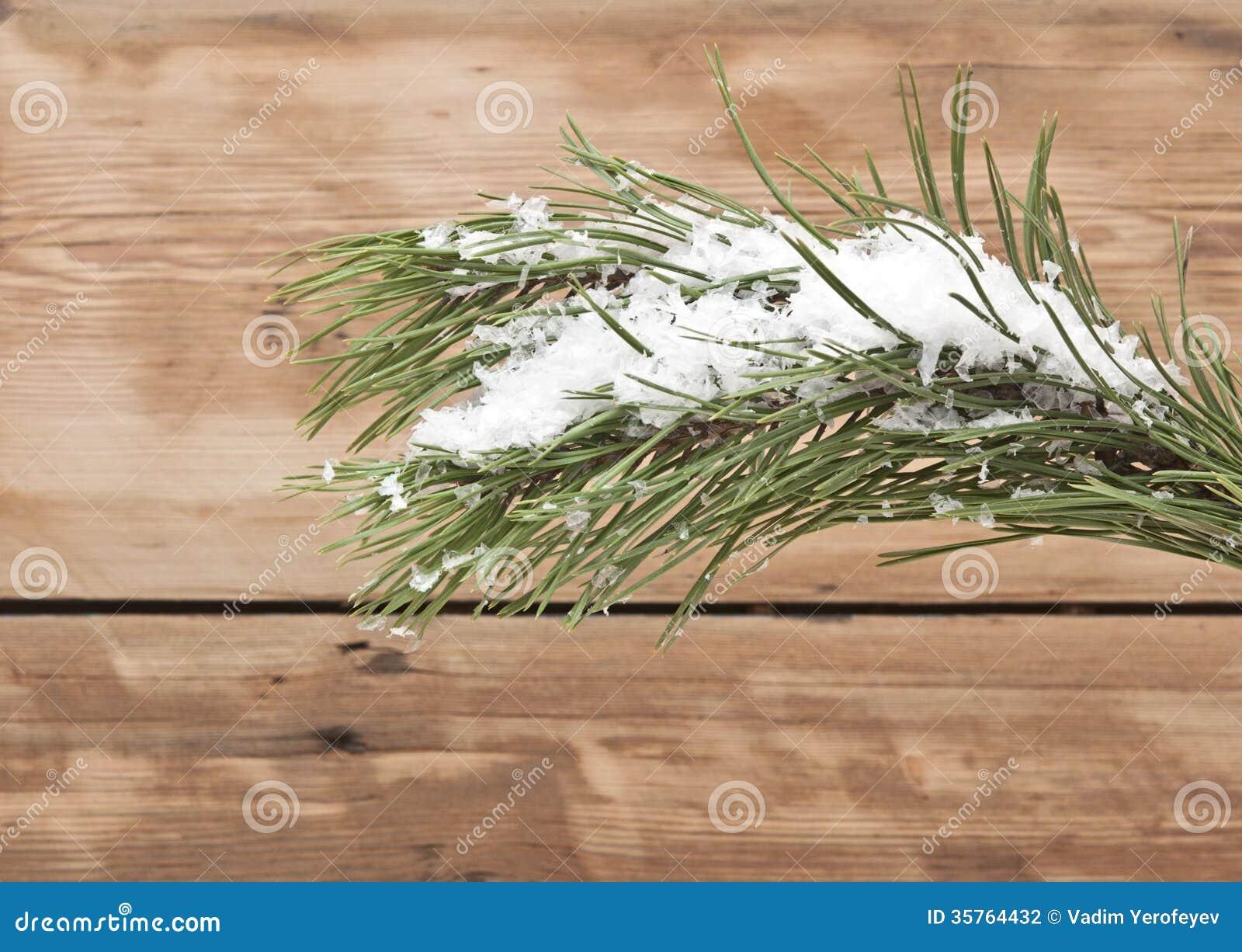Jardisart - Les plantes disponibles - Arbres feuillage persistant