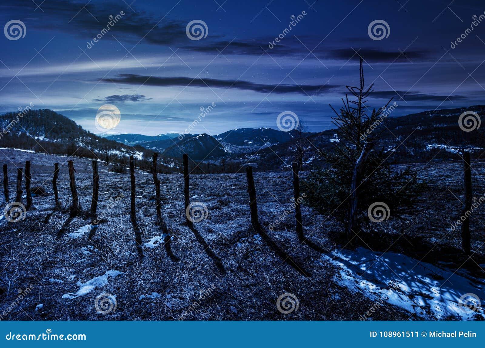Arbre impeccable sur un flanc de coteau dans le printemps la nuit