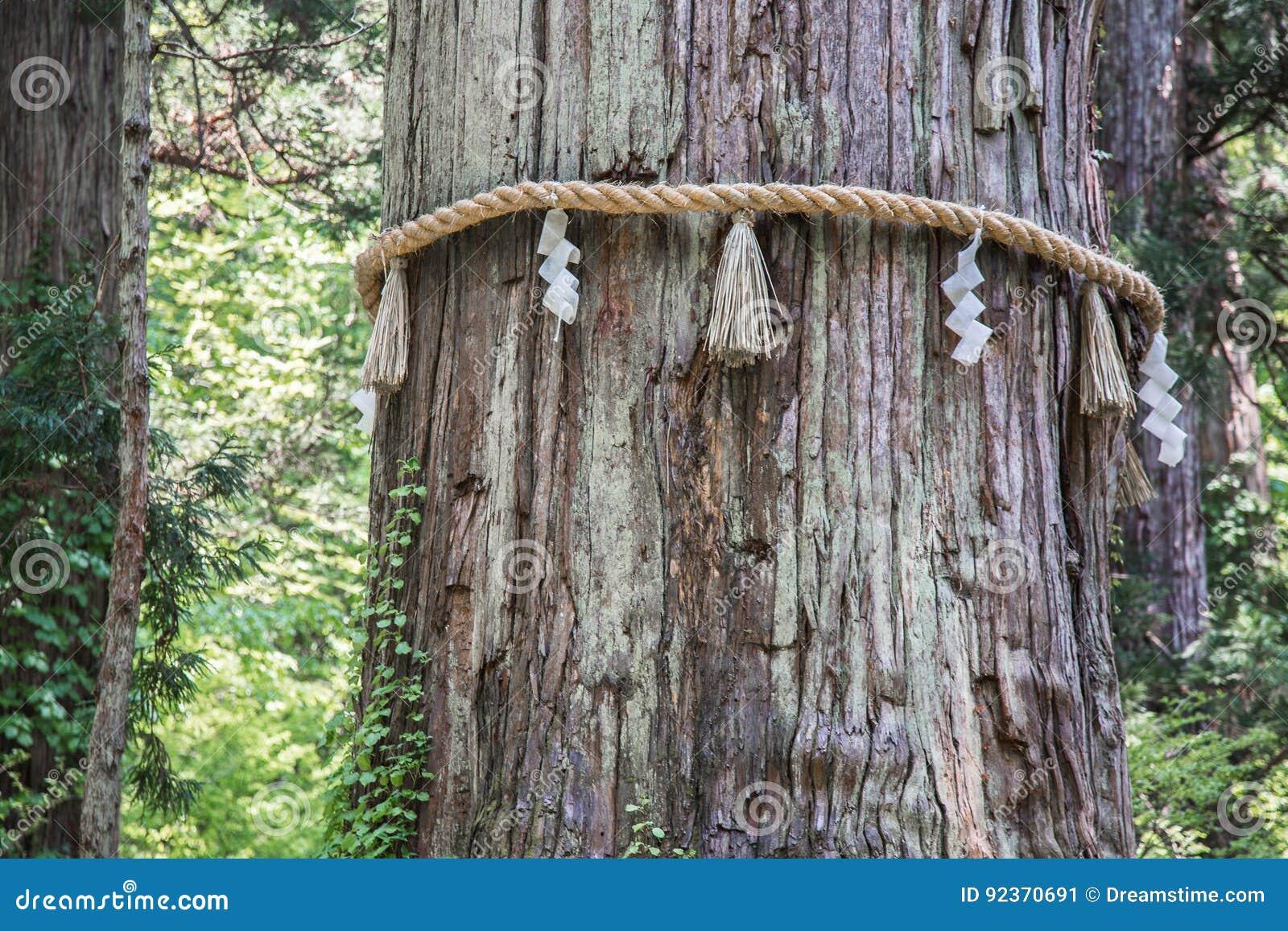Arbre japonais sacré sur le bâti Haguro