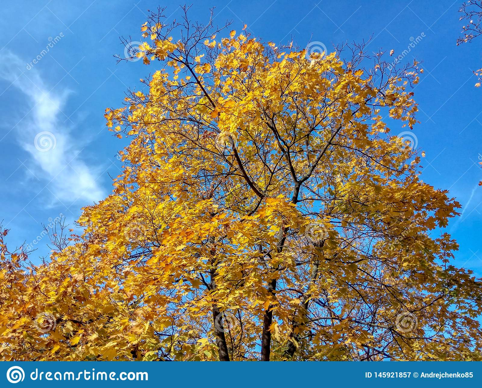 Arbre jaune sur un fond de ciel bleu