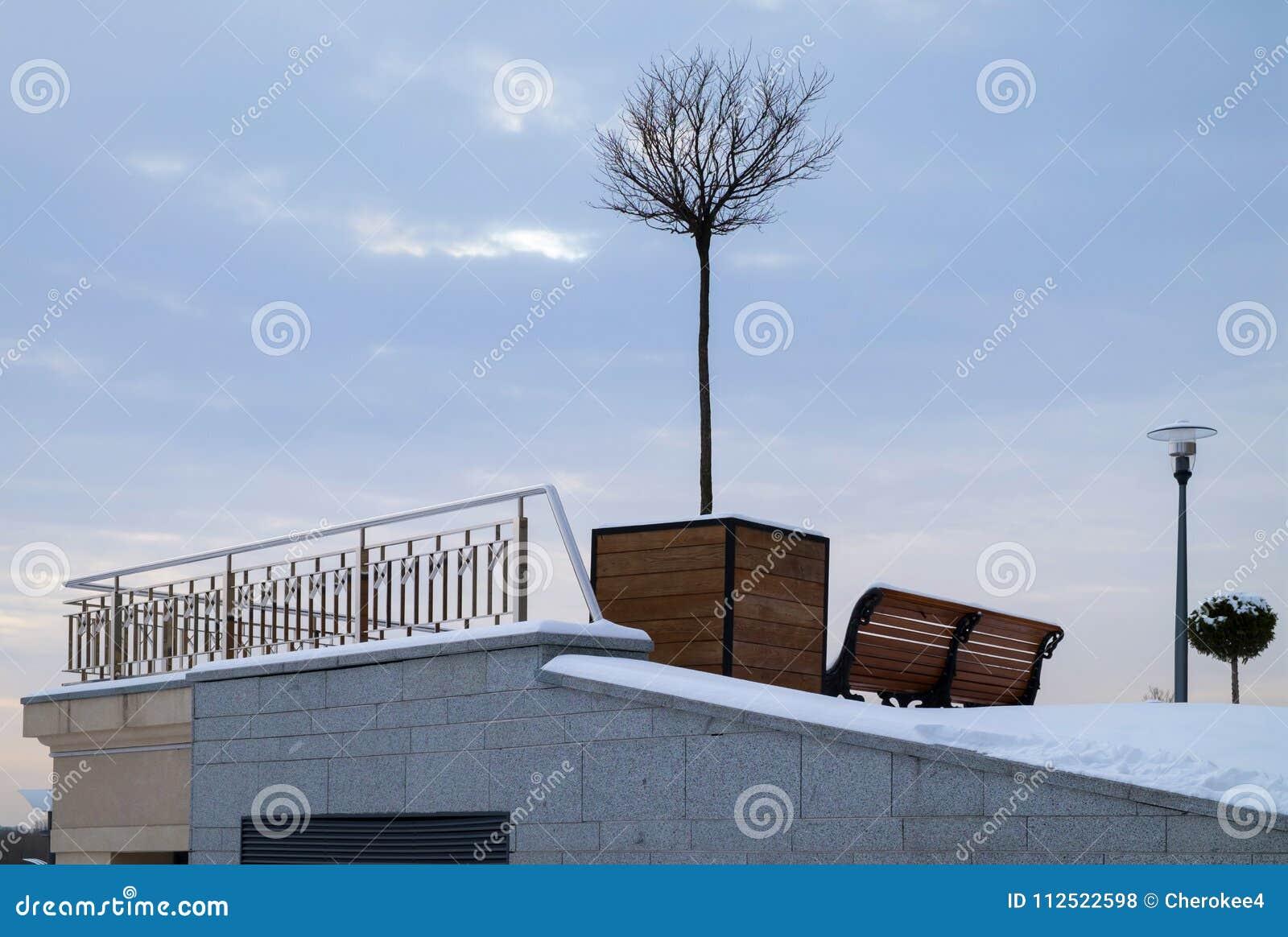 Arbre En Pot Hiver arbre miniature dans le grand pot de fleurs en bois en tant