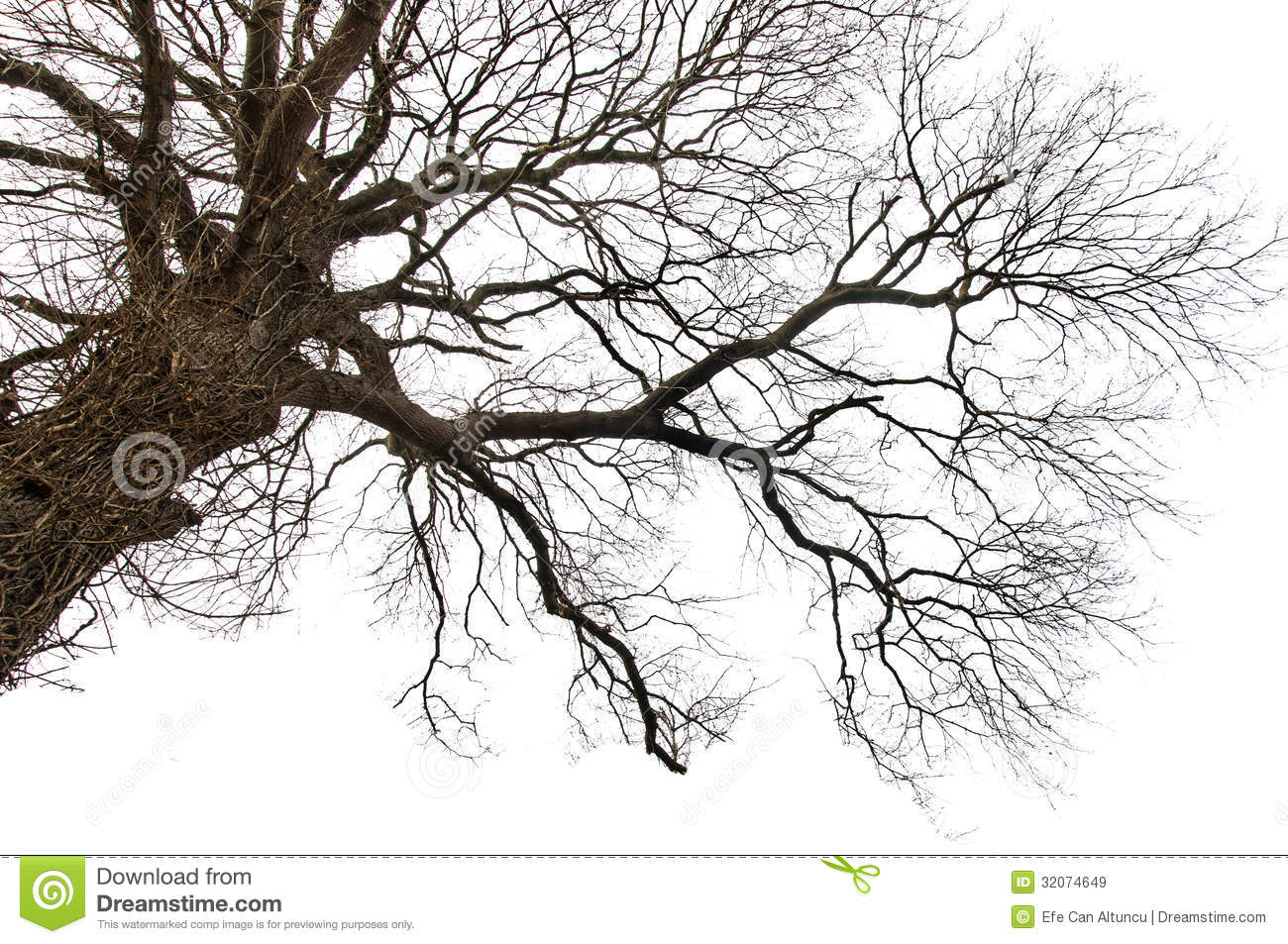 Arbre mort d isolement